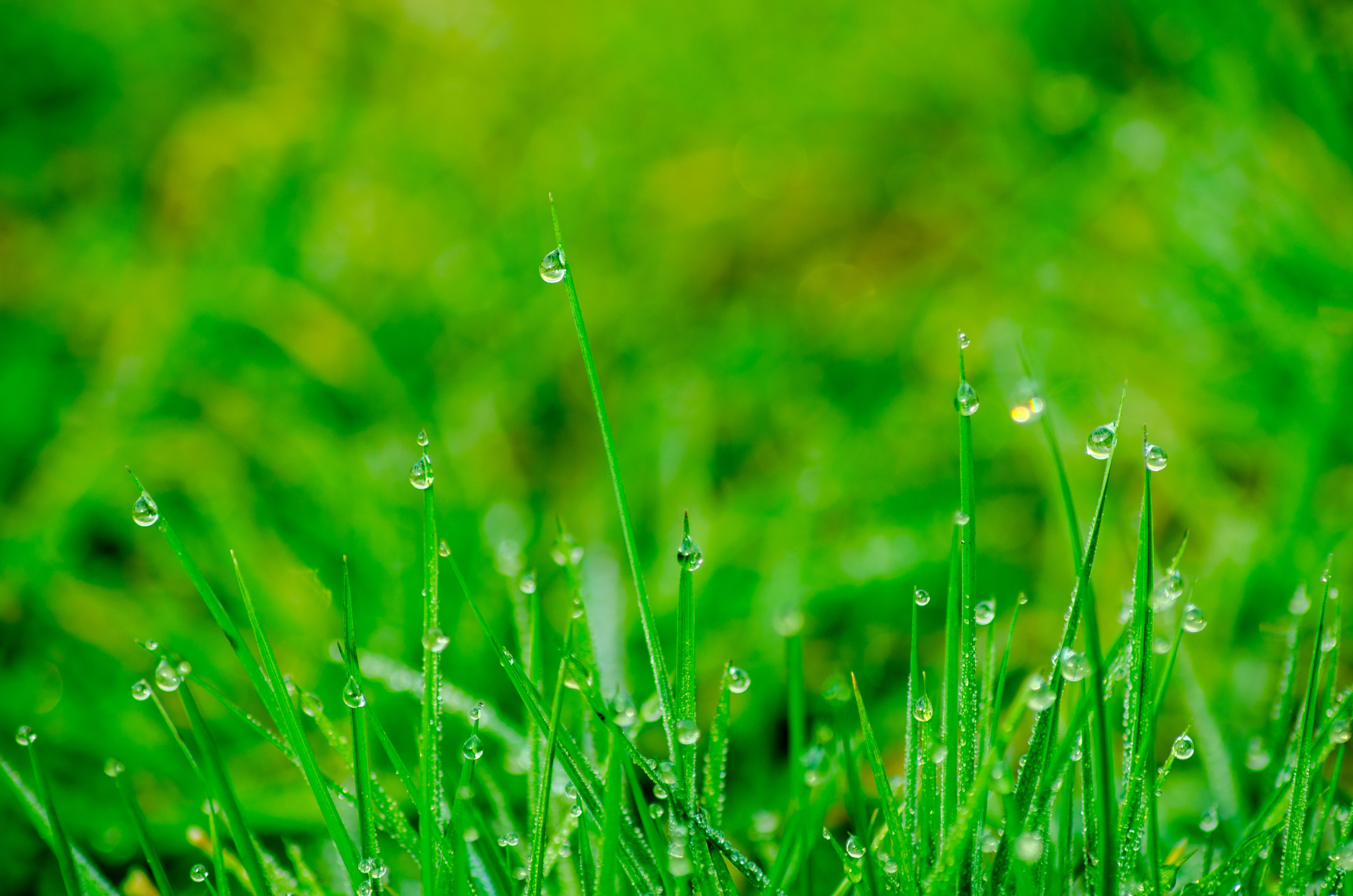 Free stock photos of grass background pexels free stock photo of nature water summer garden sciox Choice Image