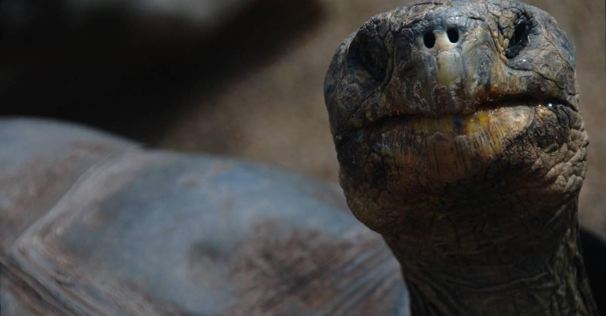 Yellow and Brown Tortoise · Free Stock Photo