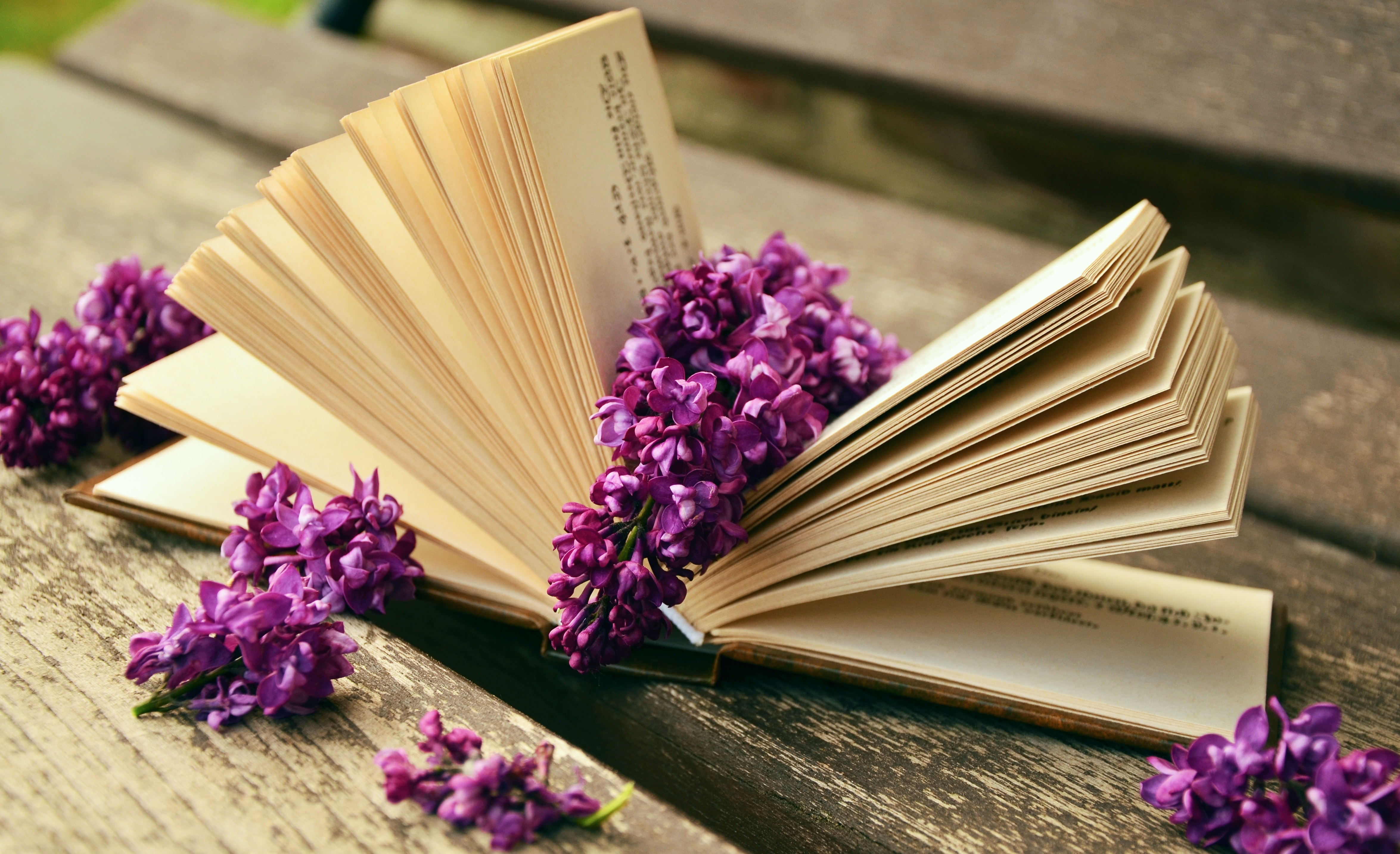 book-read-relax-lilac.jpg (4699×2865)