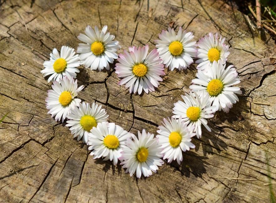 amor, corazón, flores