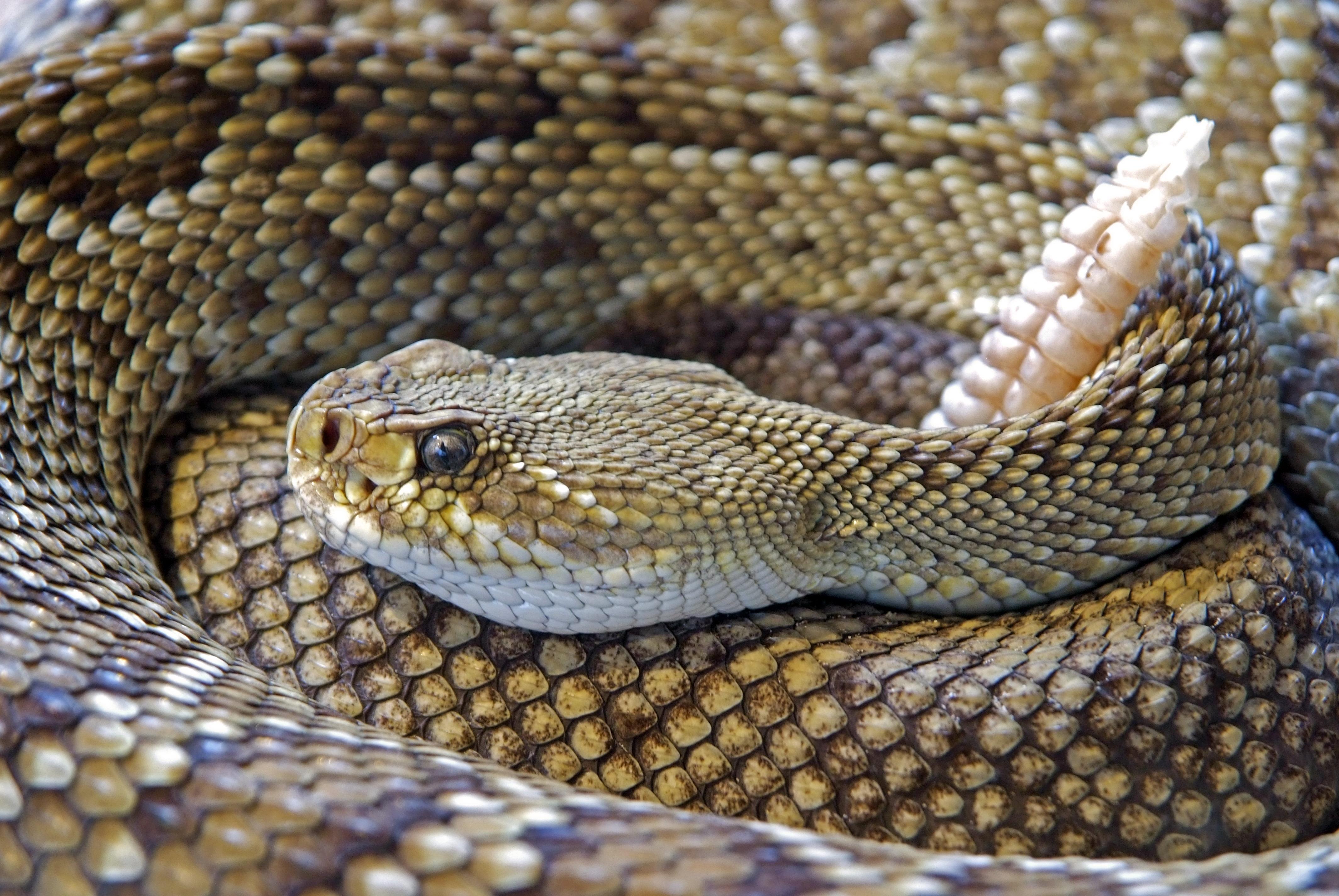 Image result for snake images