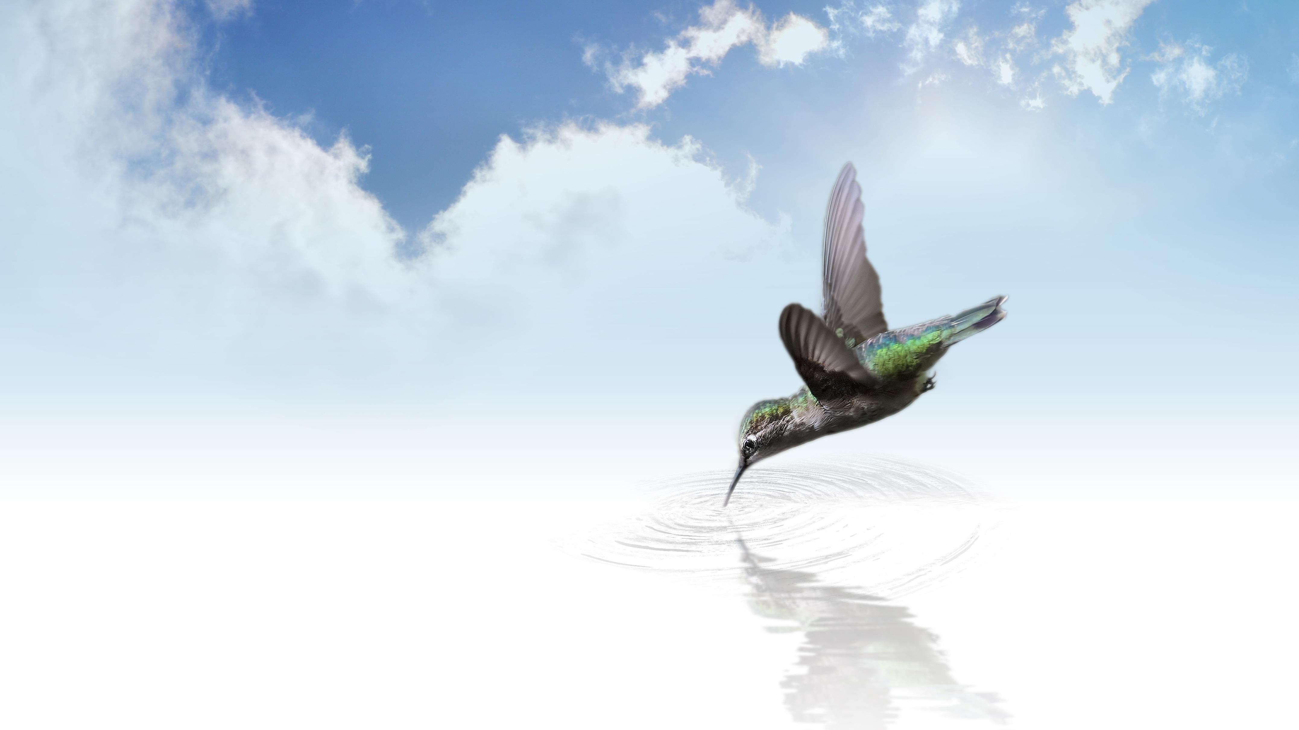 free stock photos of hummingbird pexels