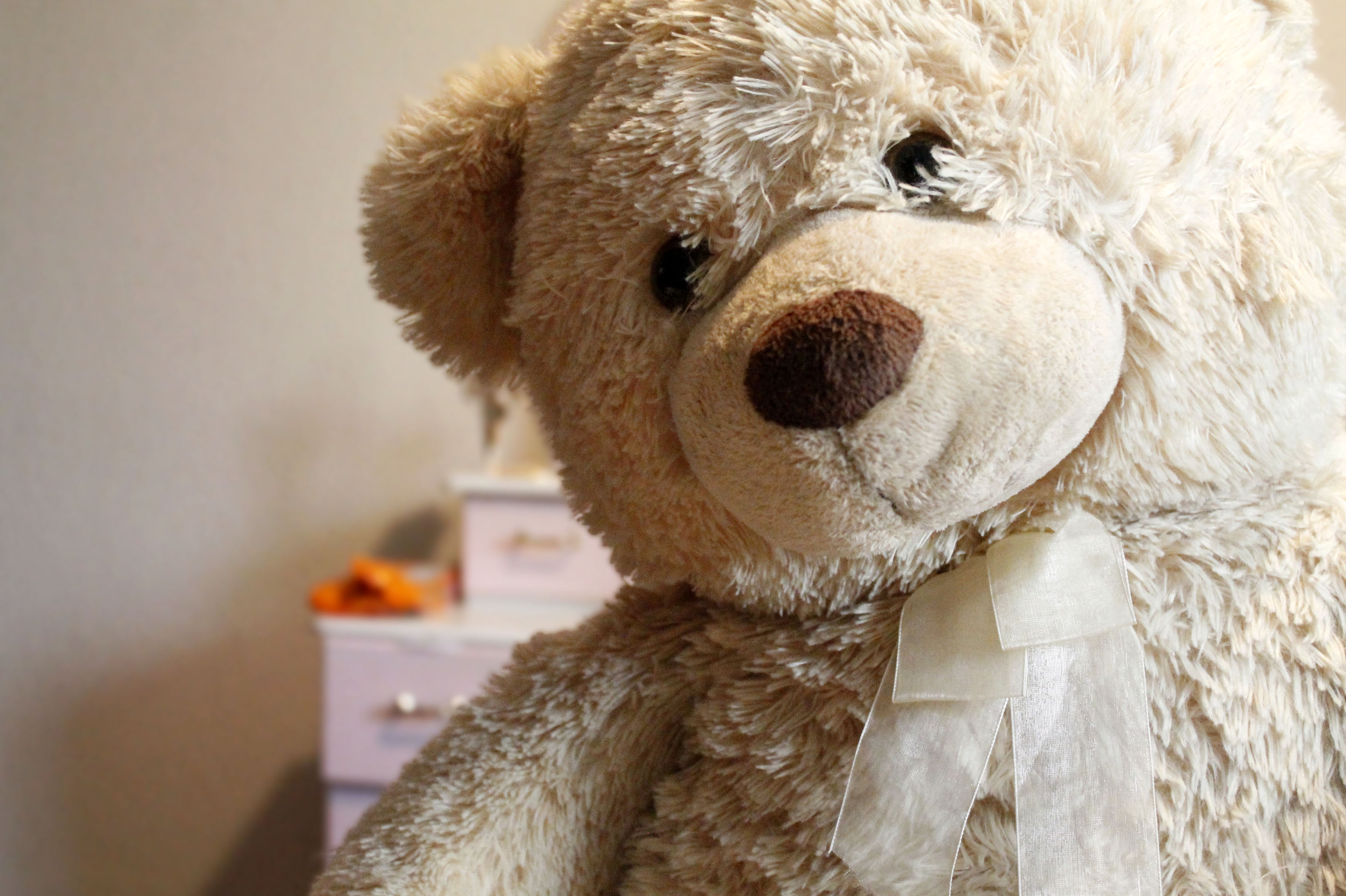 Free stock photo of teddy bear, toy