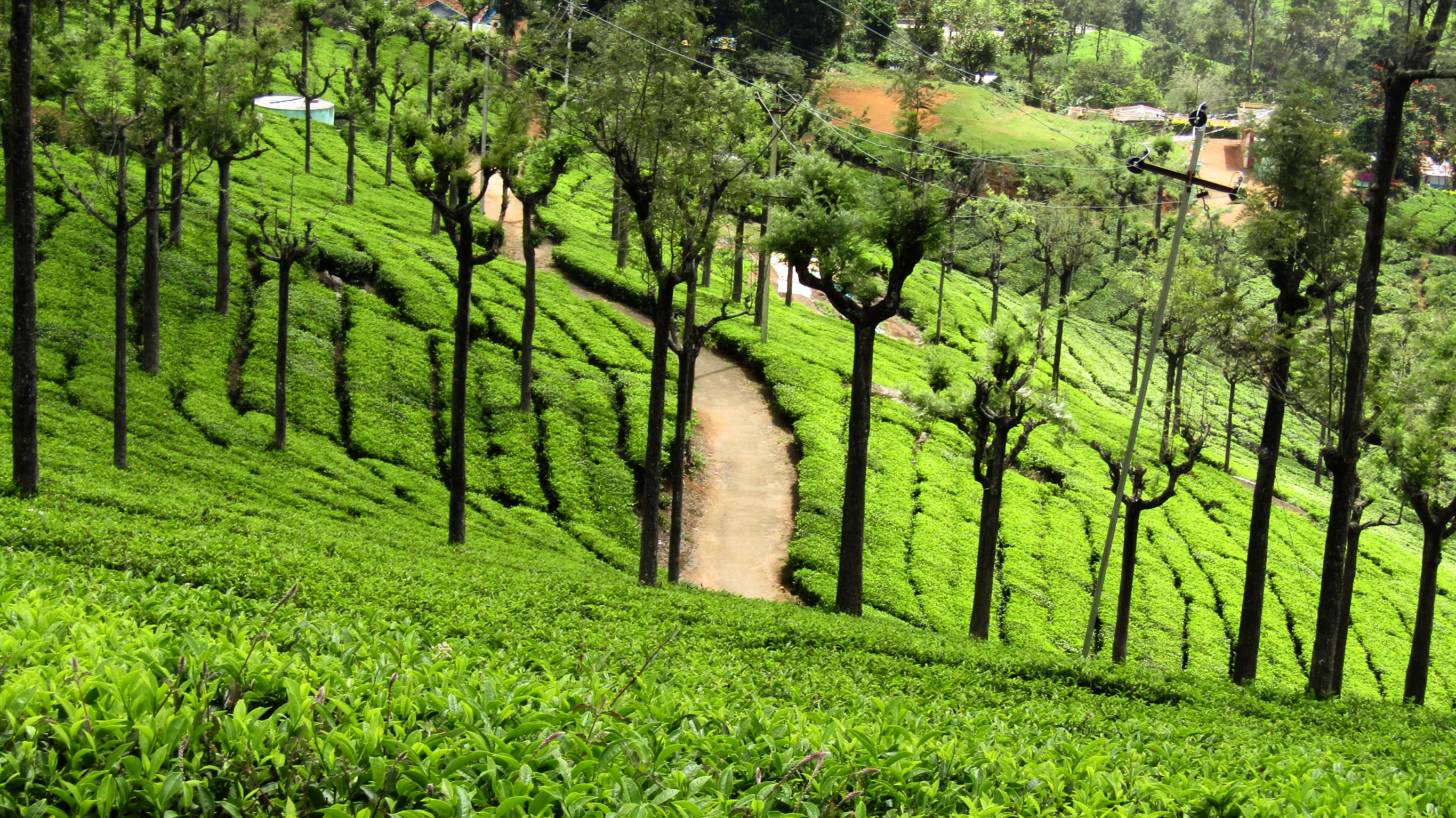 a visit to ooty Accommodation in ooty before going further i would like to help you with accommodation at ooty as it was a difficult task for me i believe accommodation is one of the most important things to choose carefully when you are visiting a hill station.