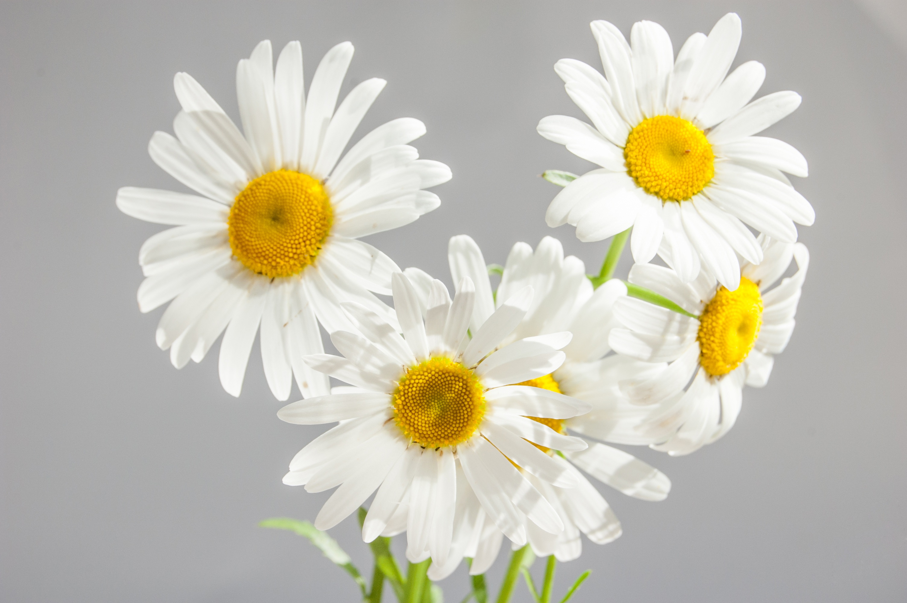 White And Yellow Flower Free Stock Photo