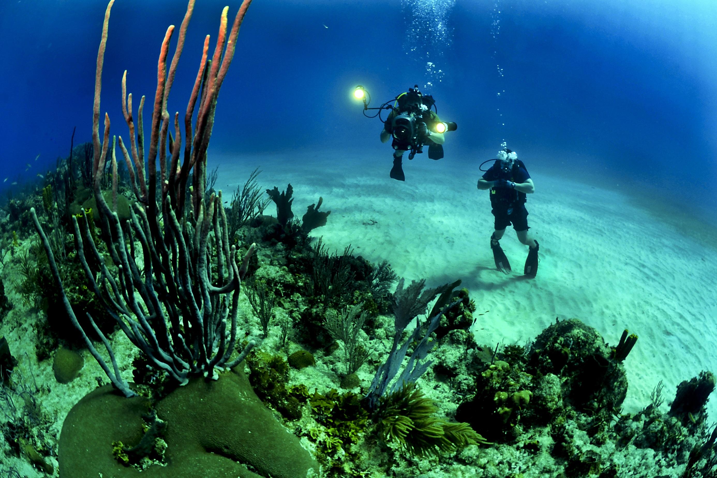 underwater ghost nets posing threat to marine ecosystem
