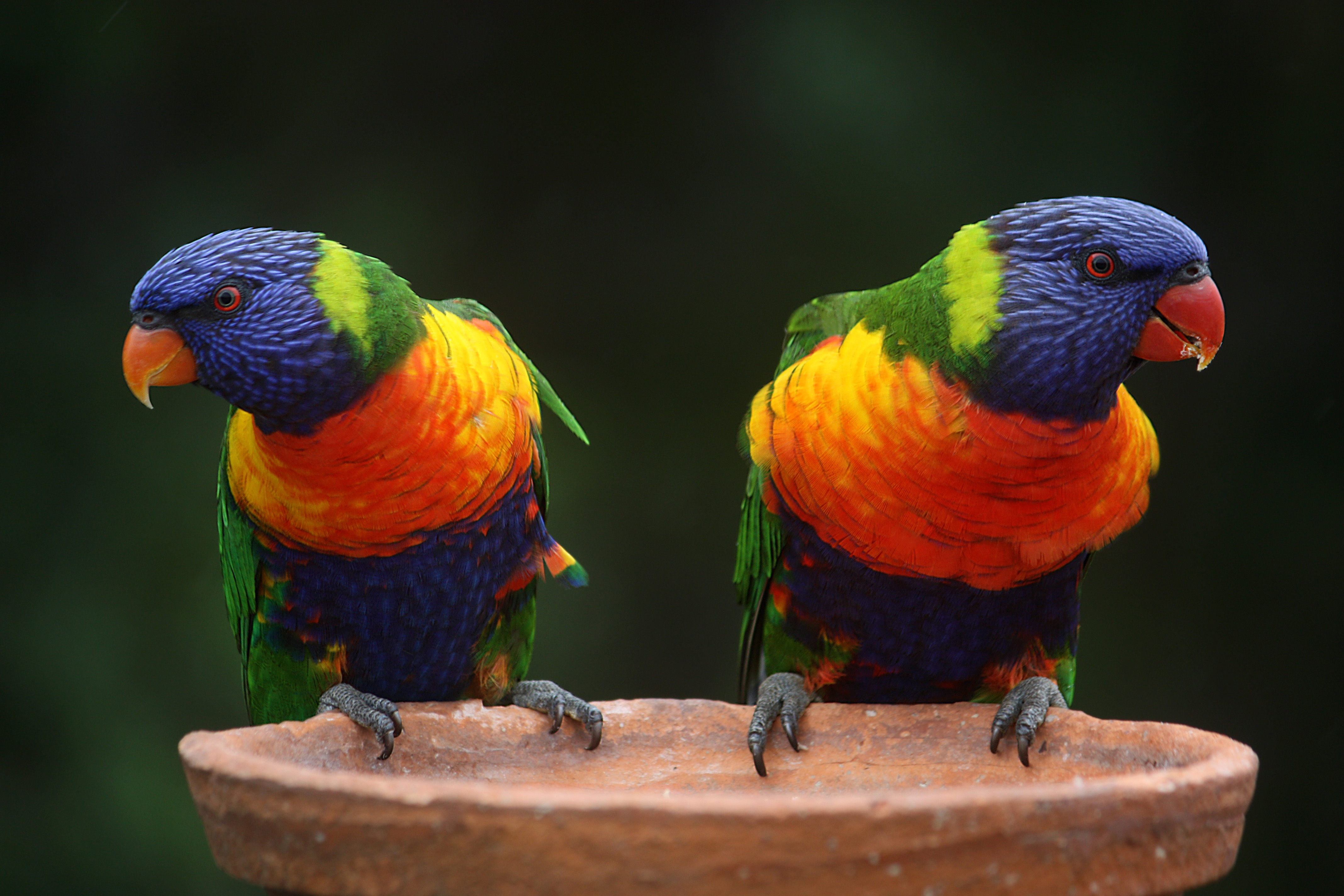 Image result for public domain images parrots