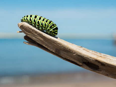 Green and Black Catterpillar on a Wood in Daylight Close Photography