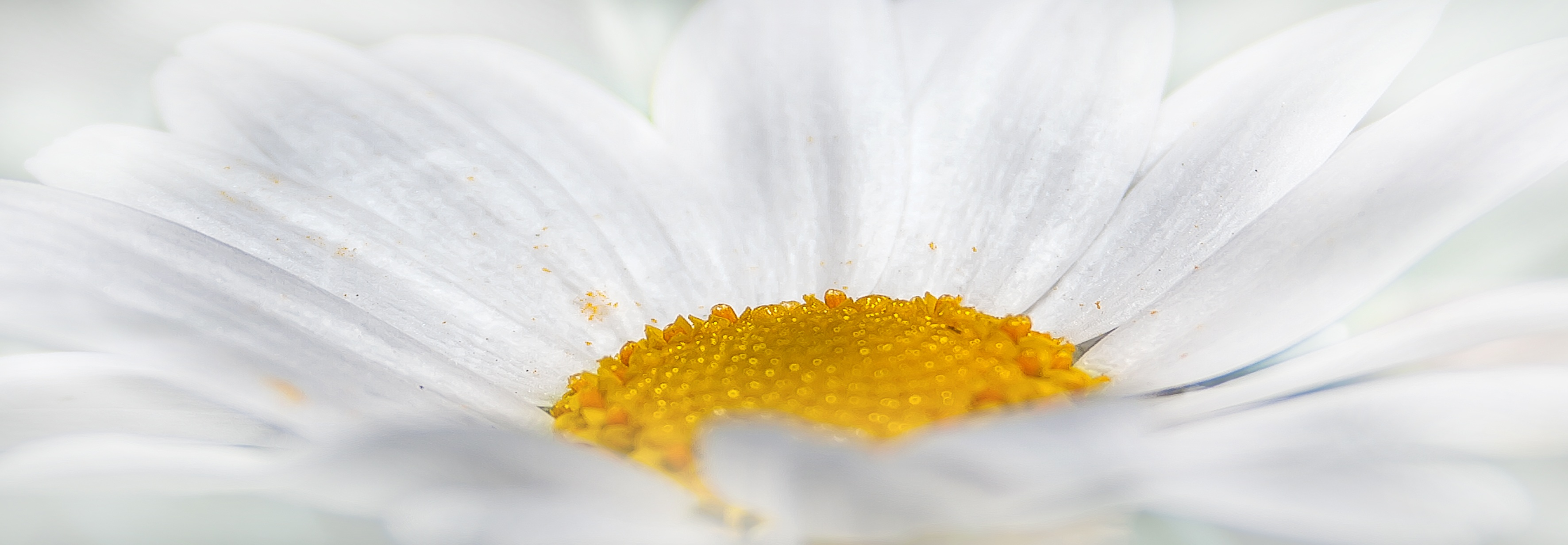 free stock photos of white flower · pexels, Beautiful flower
