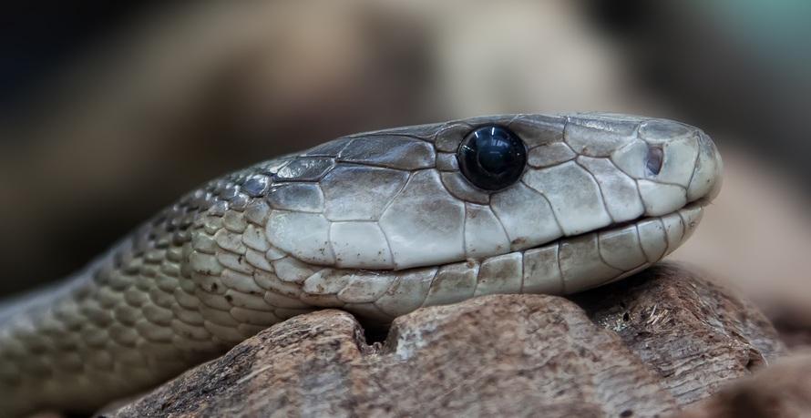 animal, close-up, macro