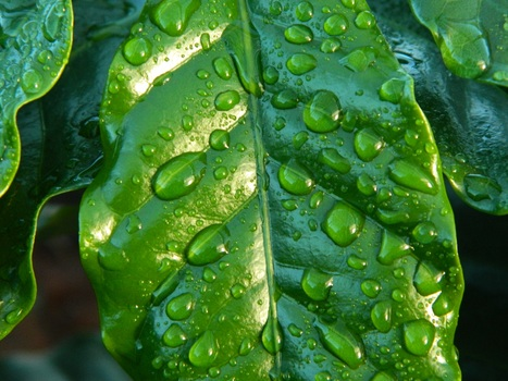 Free stock photo of water, leaf, rain, green