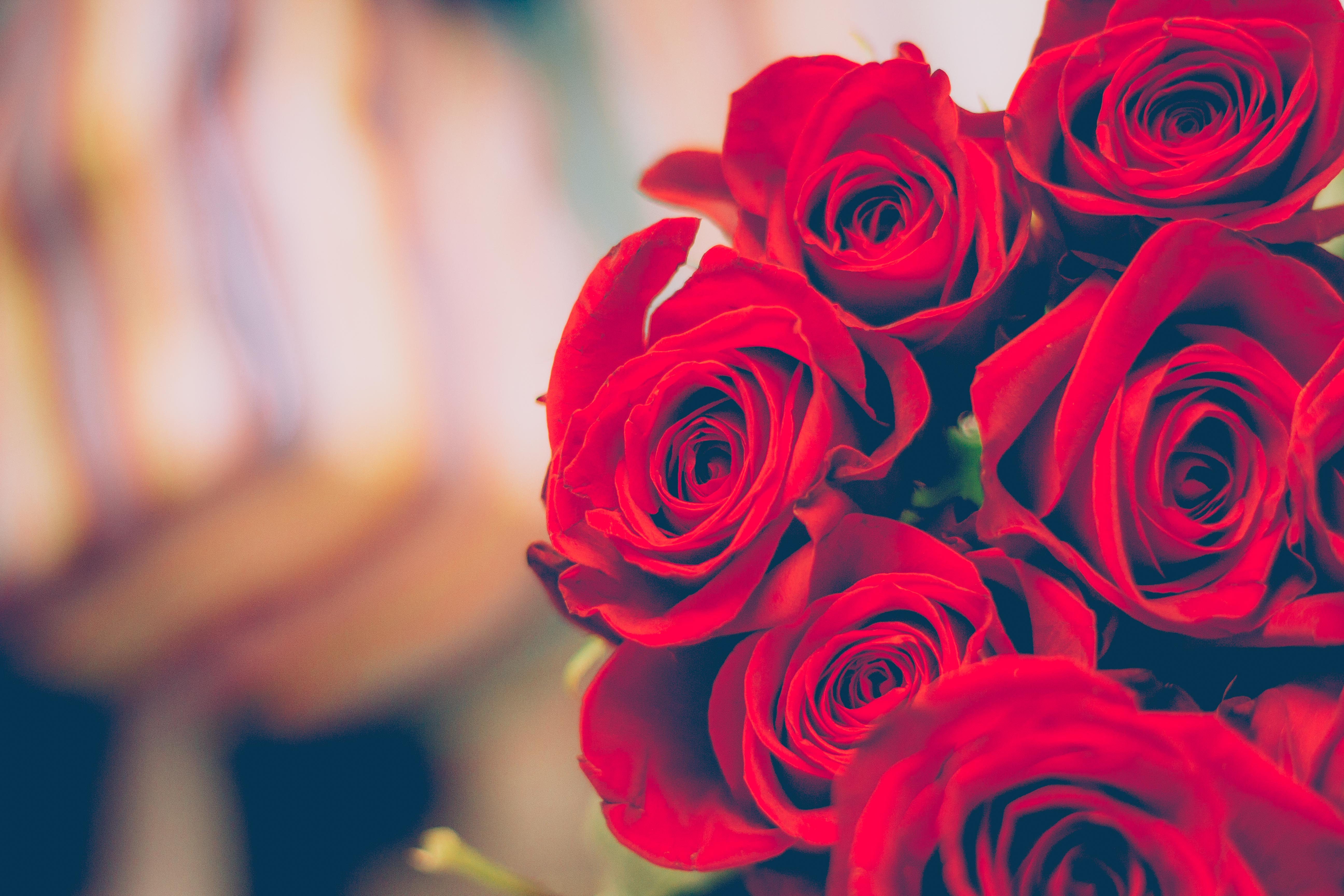 Free Stock Photo Of Red, Flowers, Petals, Blur