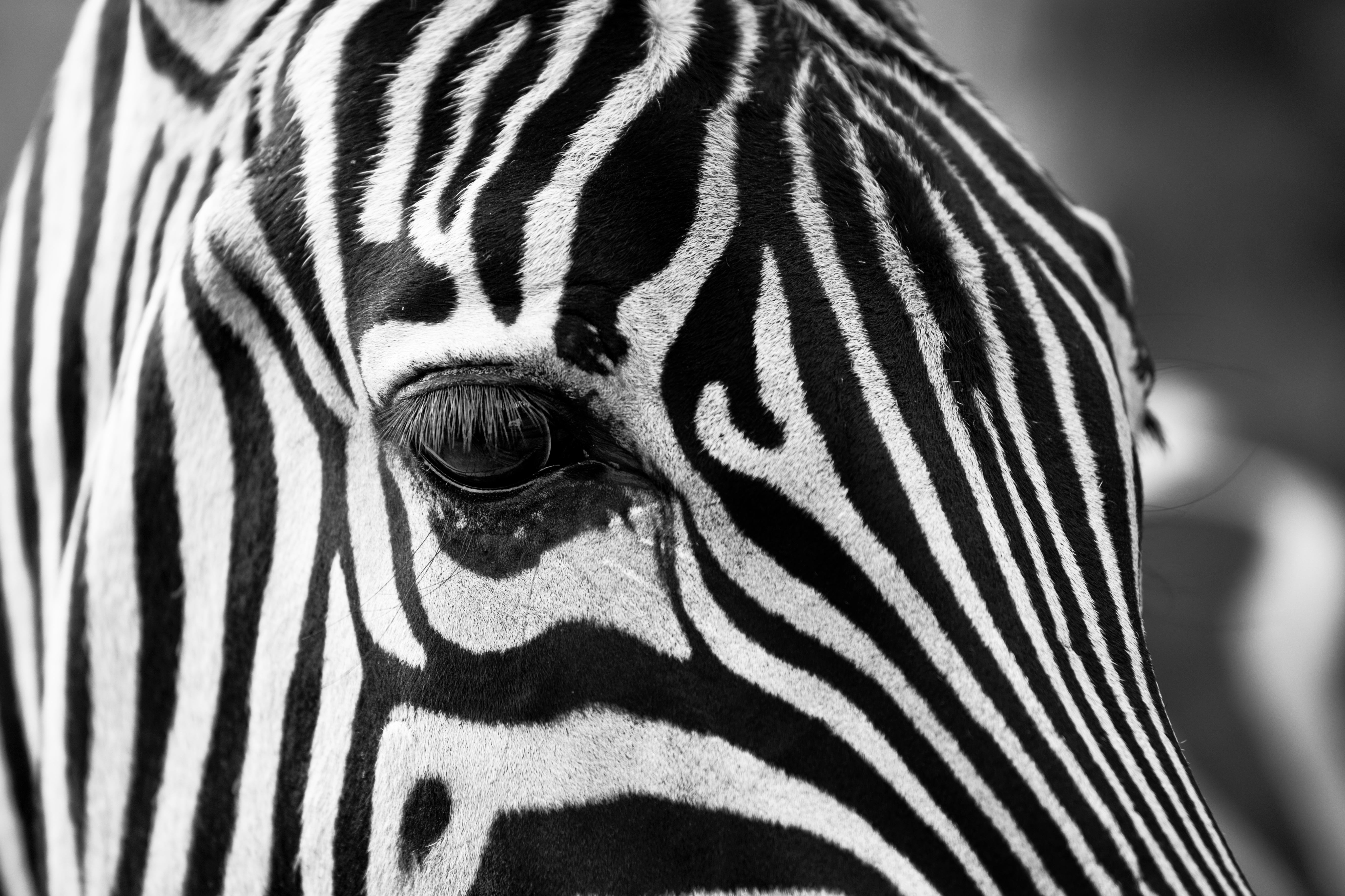 africa photos pexels free stock photos