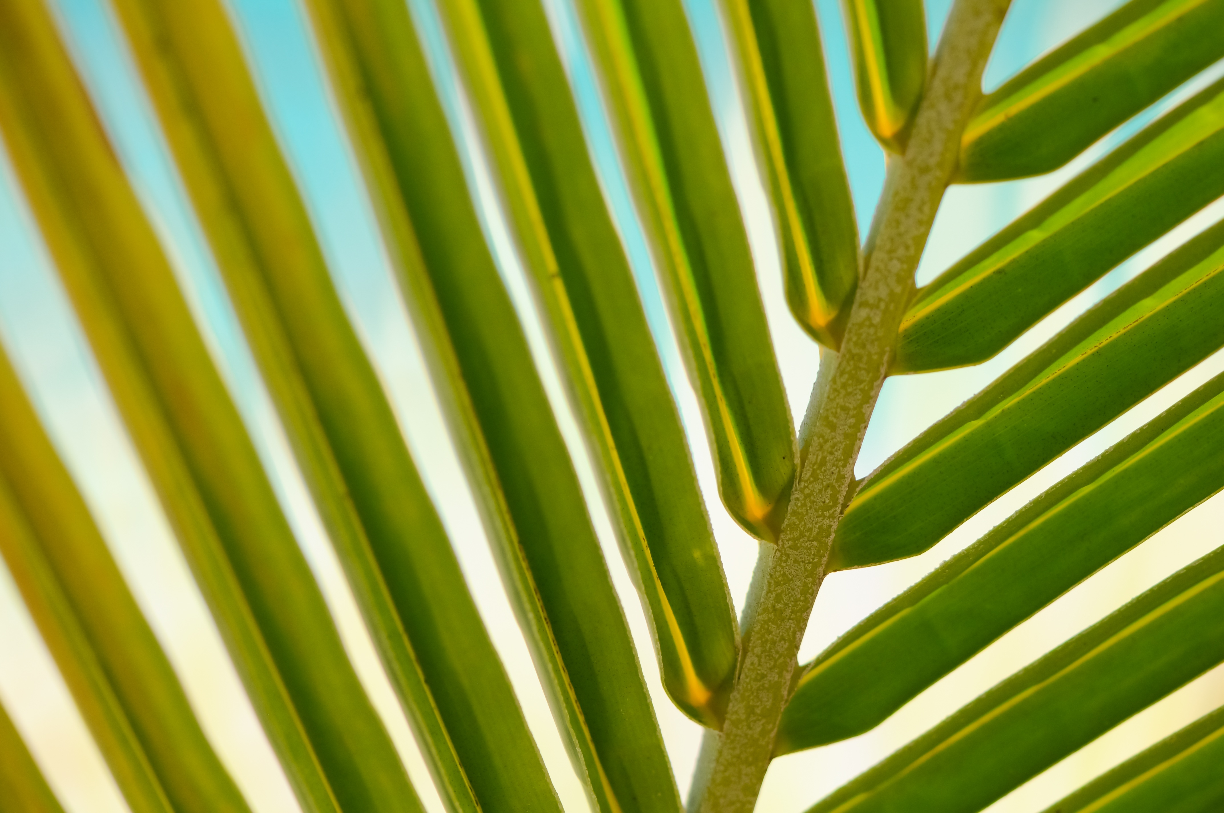 free stock photos of palm leaves pexels