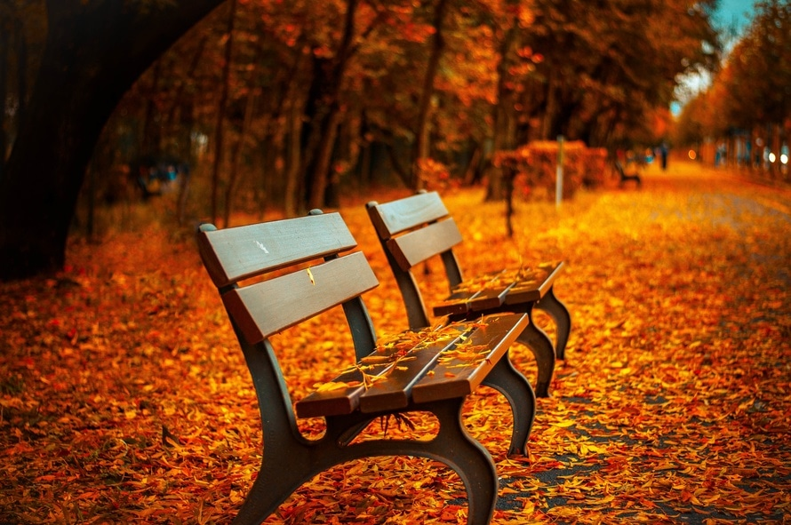 Park bench covered with leaves