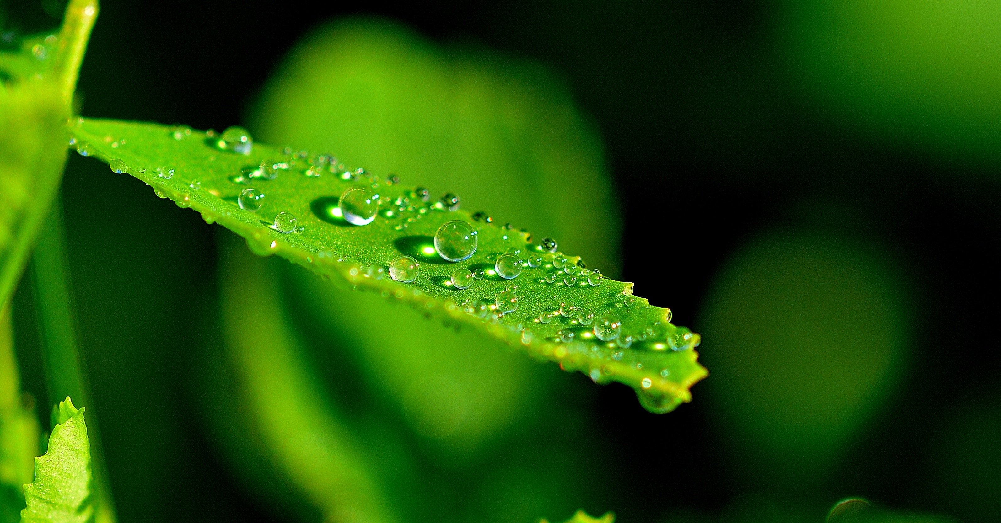 Photo Collection Nature Leaf Close Up
