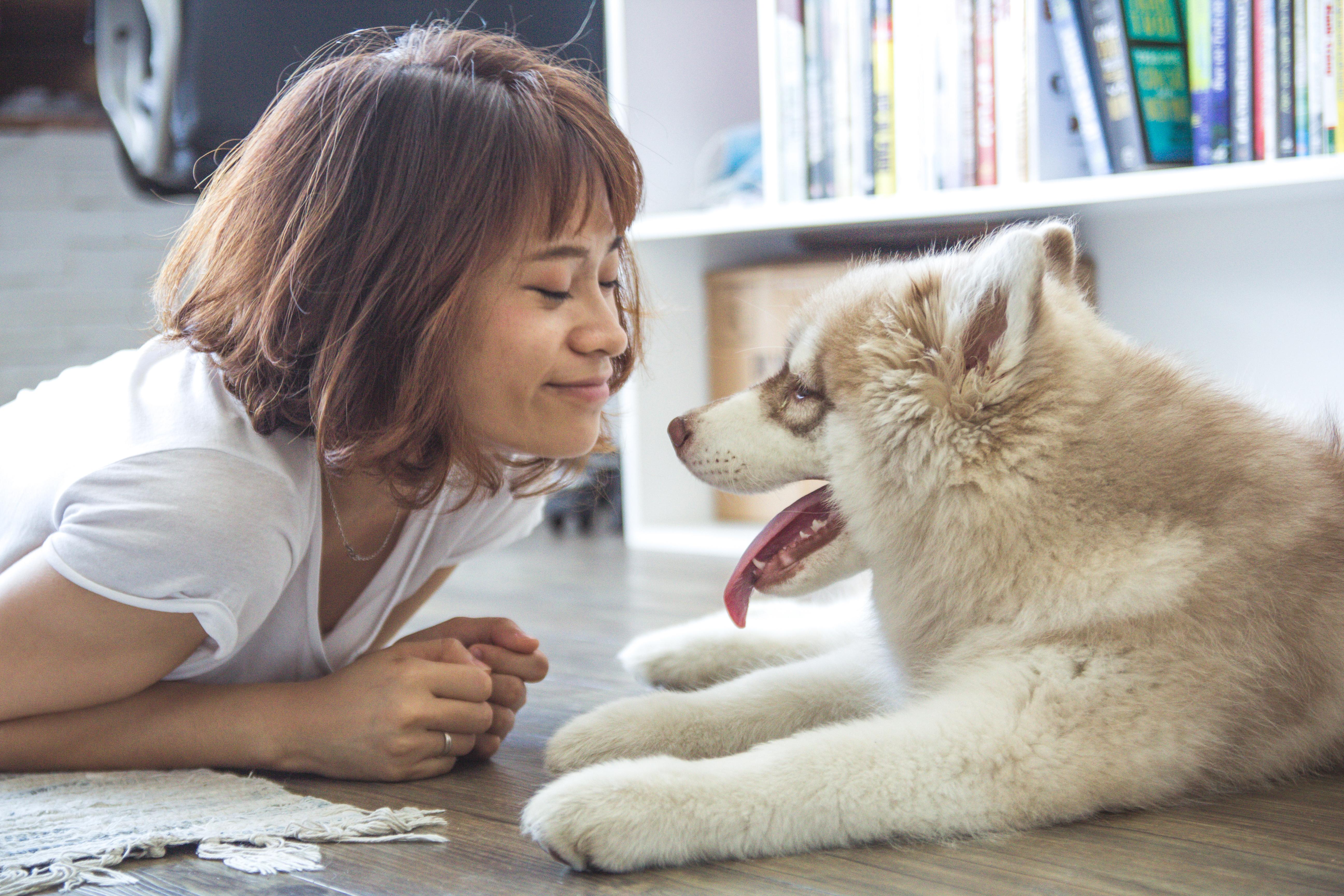free stock photo of animal dog feelings
