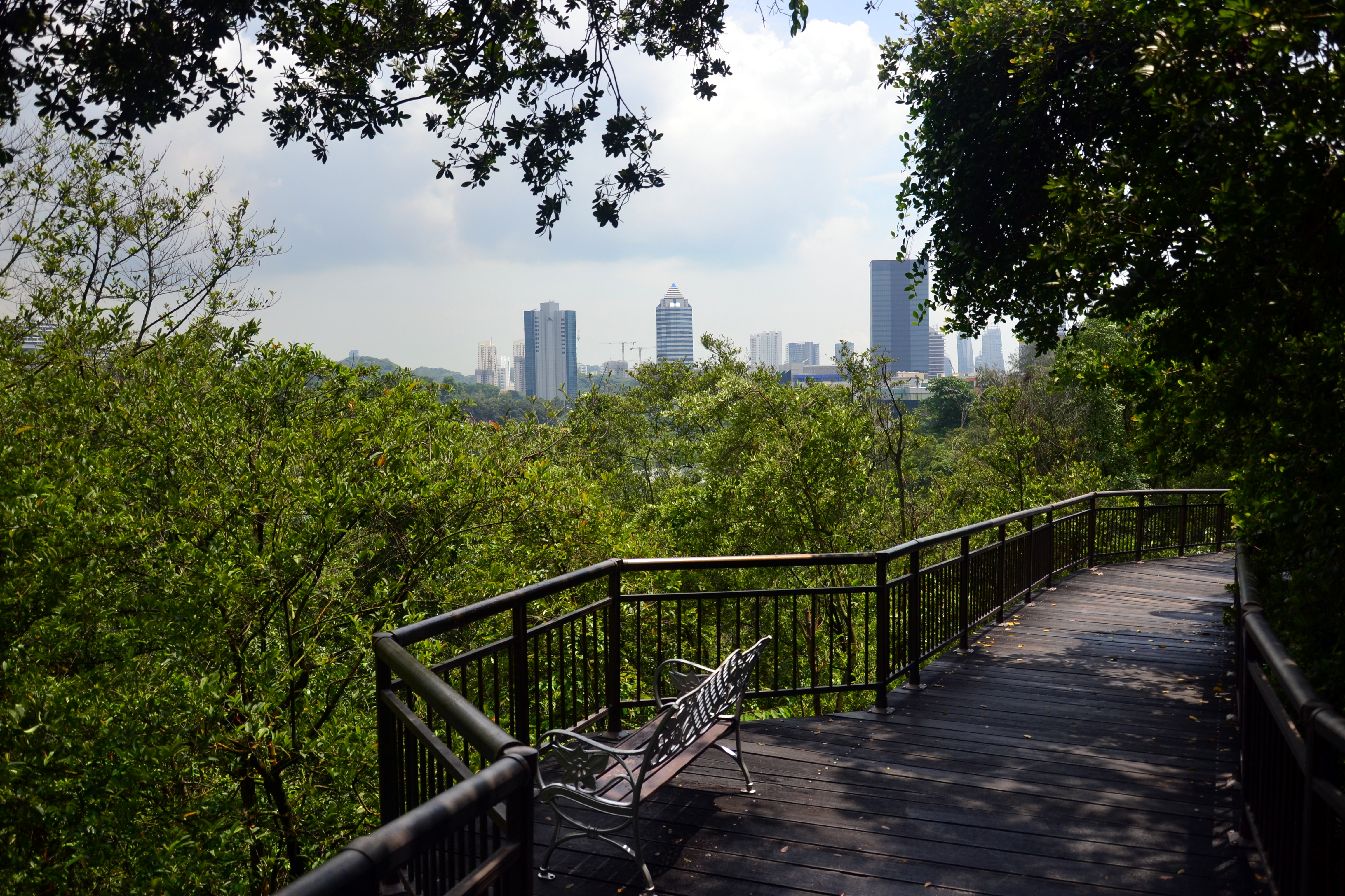 Stock Chart Singapore: Free stock photo of city forest singapore,Chart