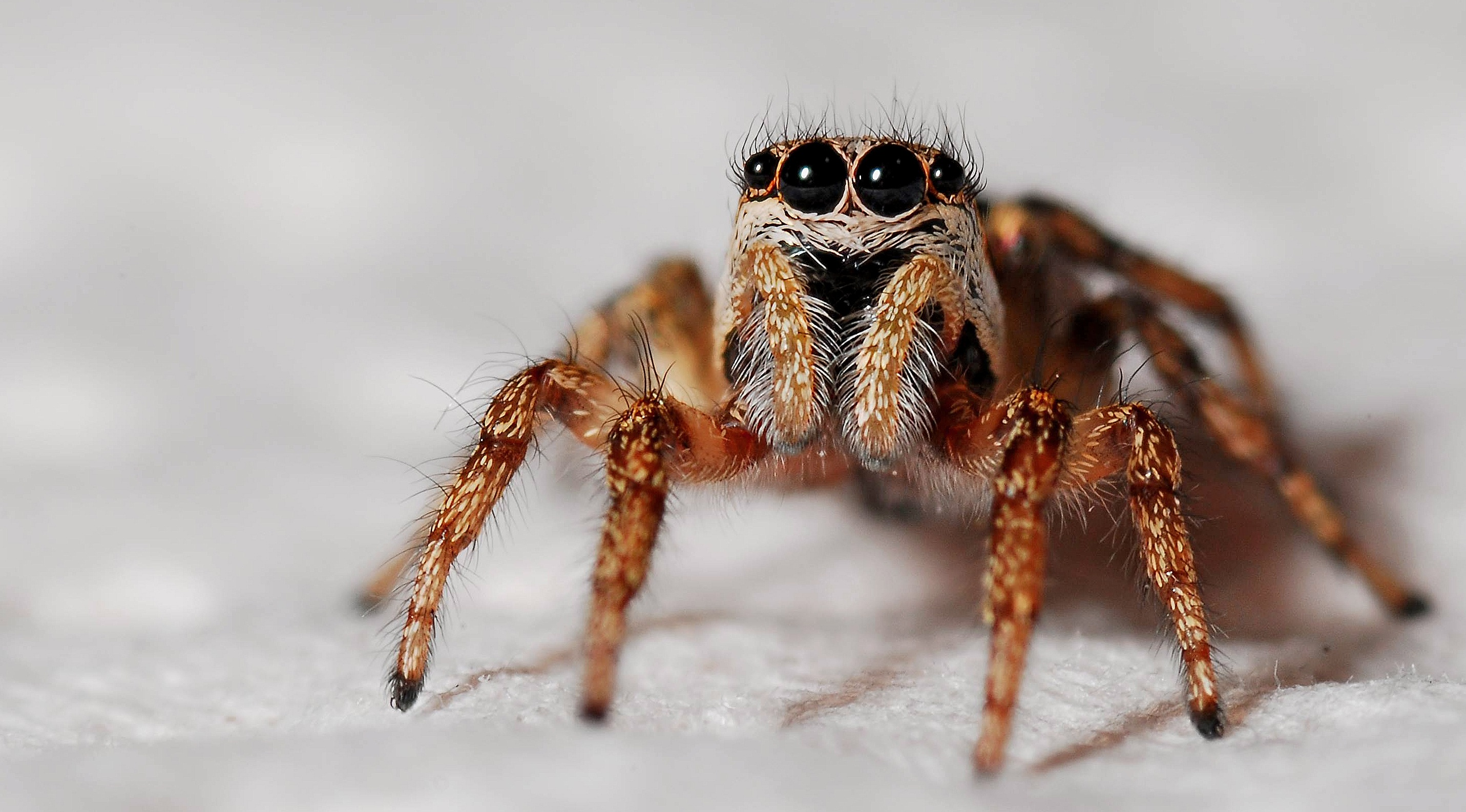 Spider >> Spider Pictures Pexels Free Stock Photos