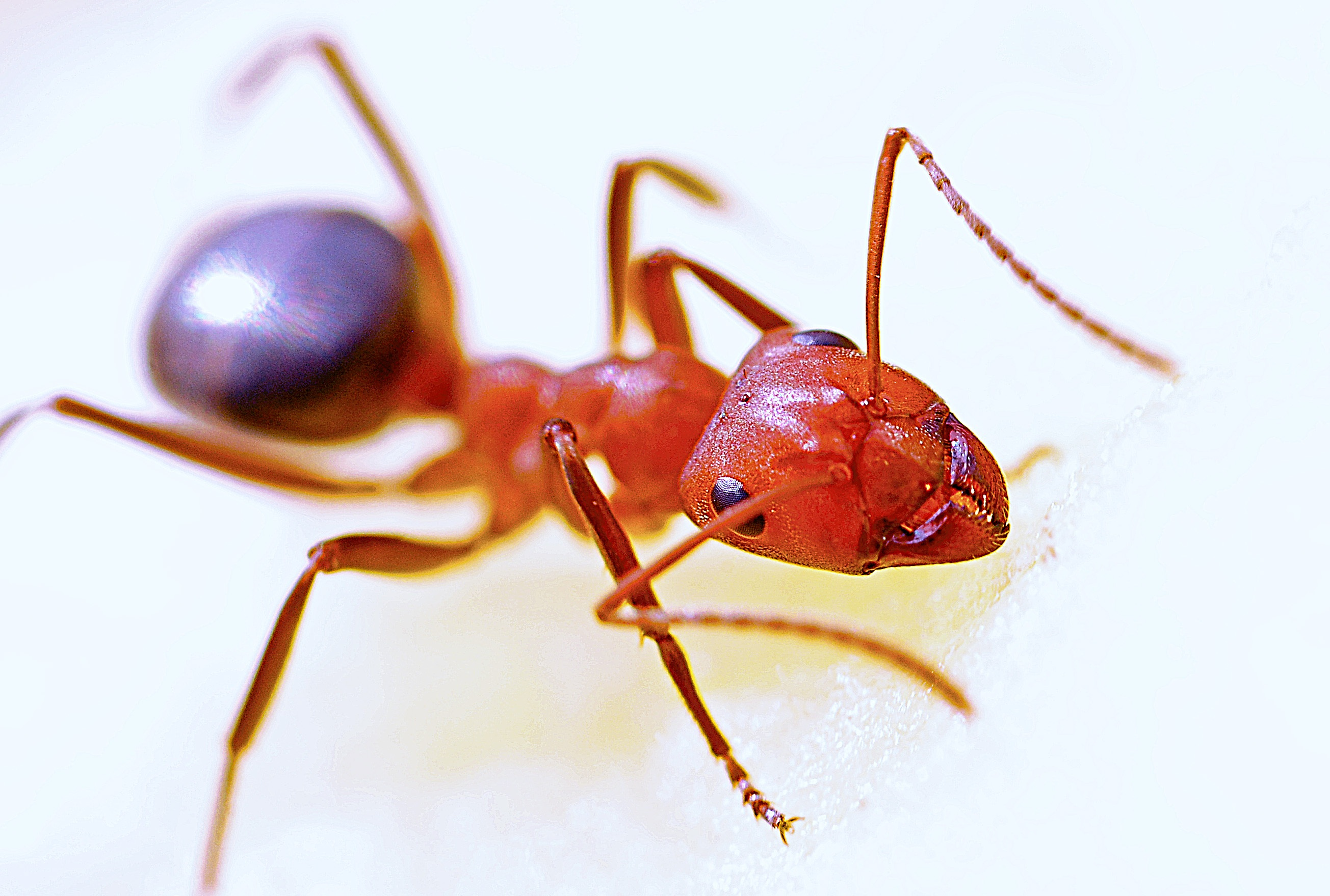 Ant Pictures Pexels Free Stock Photos