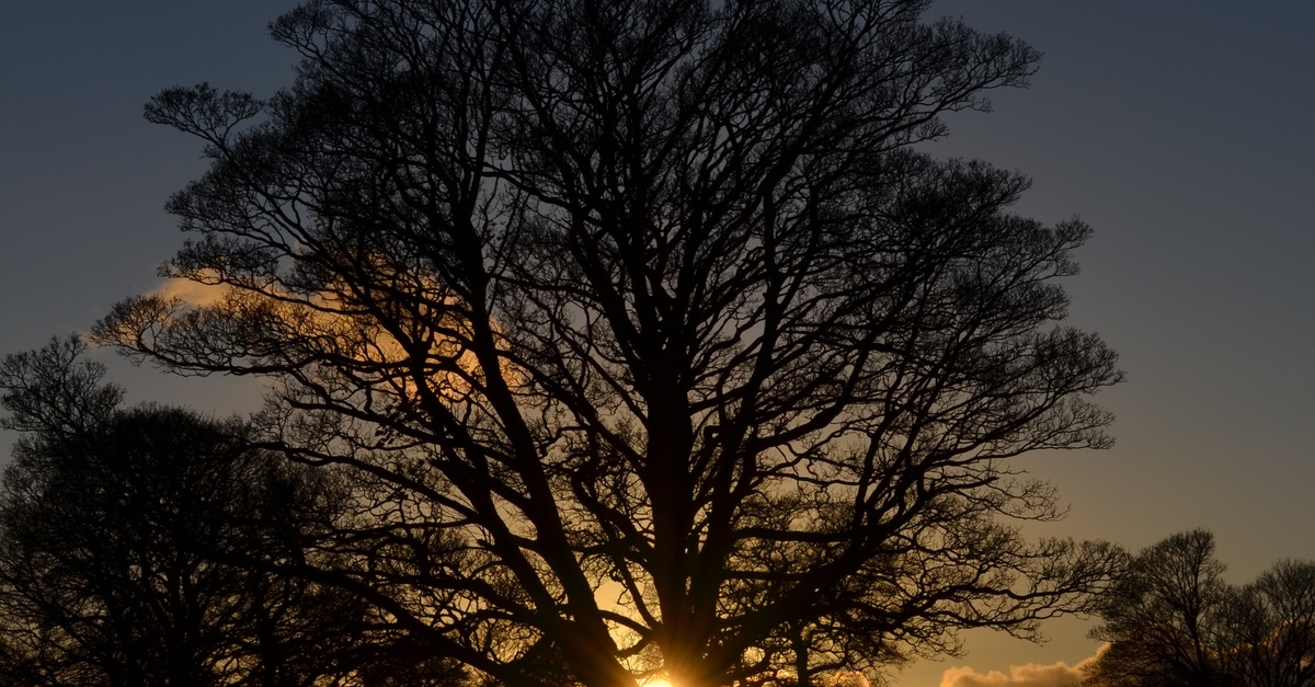 sun and winter solstice Winter may just be getting started, but if you're ready for more sunlight, you won't have much longer to wait dec 21 is the winter solstice: the shortest day and longest night of the year here in earth's northern hemisphere starting friday, the sun will be up for a few seconds longer each.