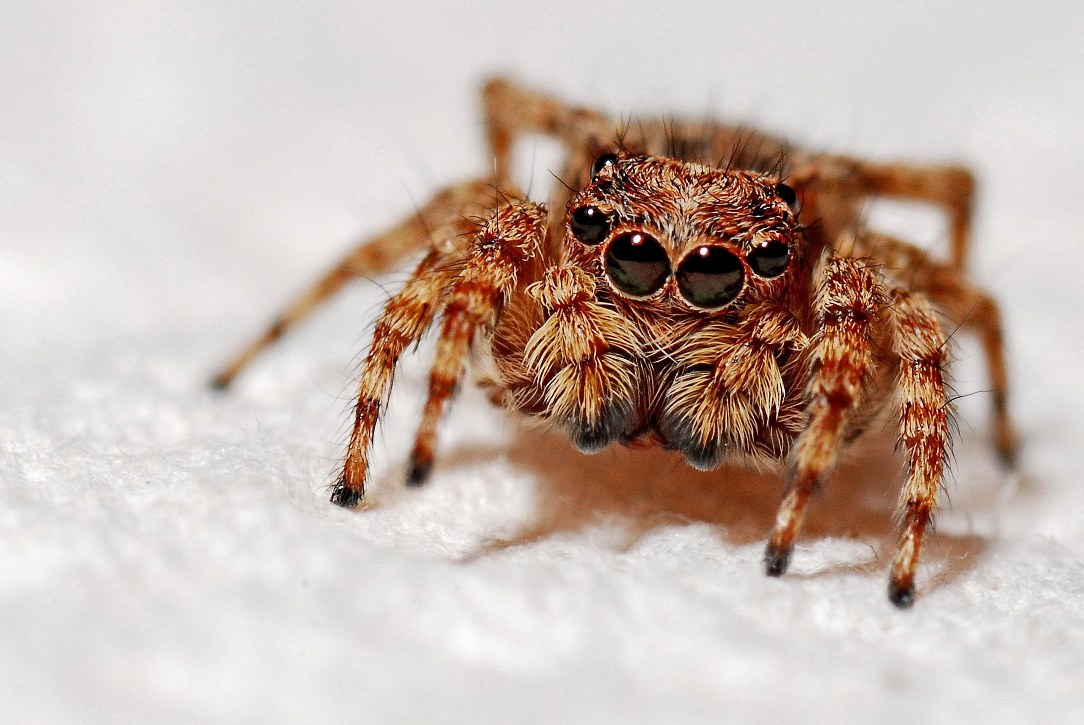 Free stock photo of animal, arachnid, arthropod