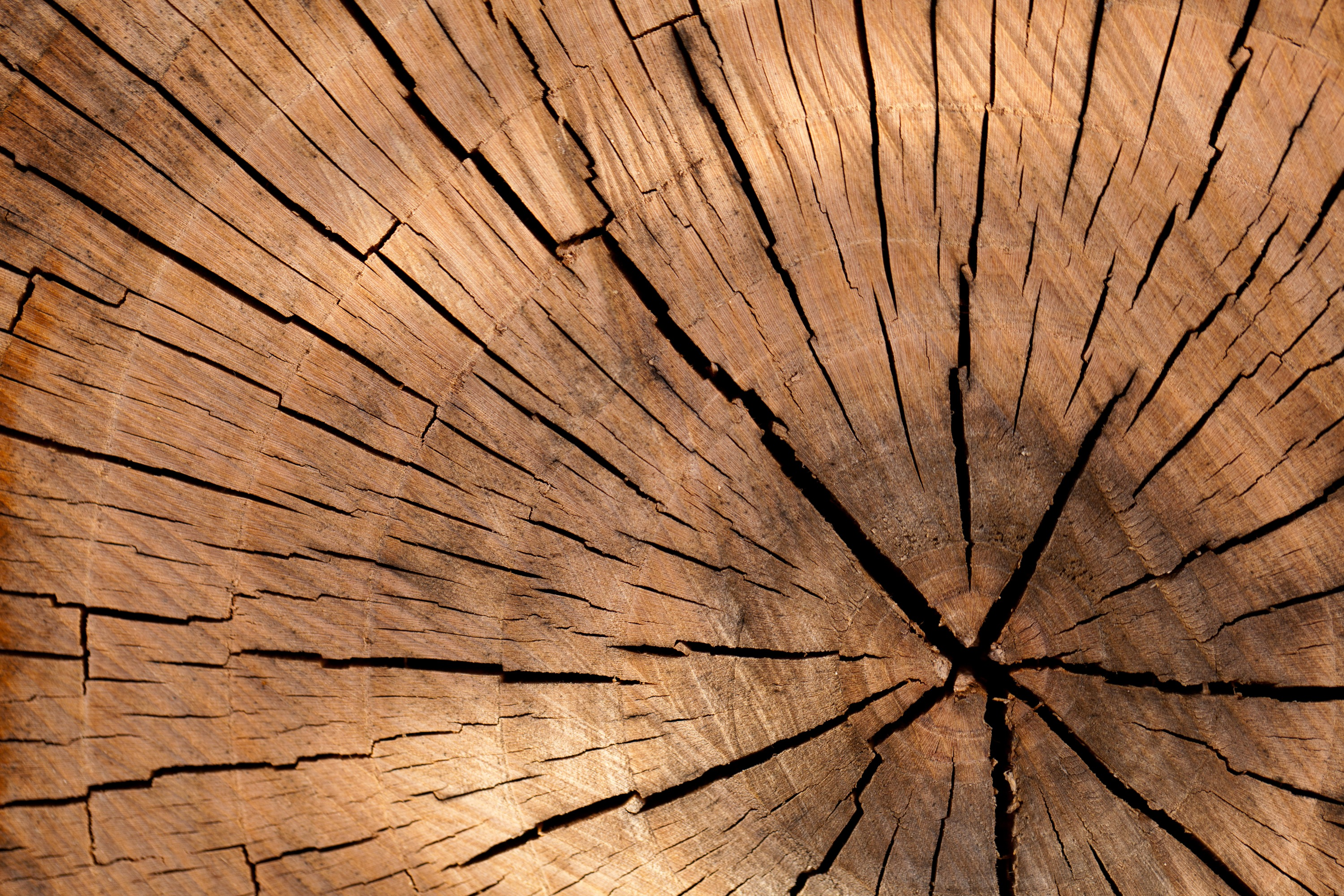 Wooden table background pattern - Free Stock Photo Of Wood Pattern Texture Tree
