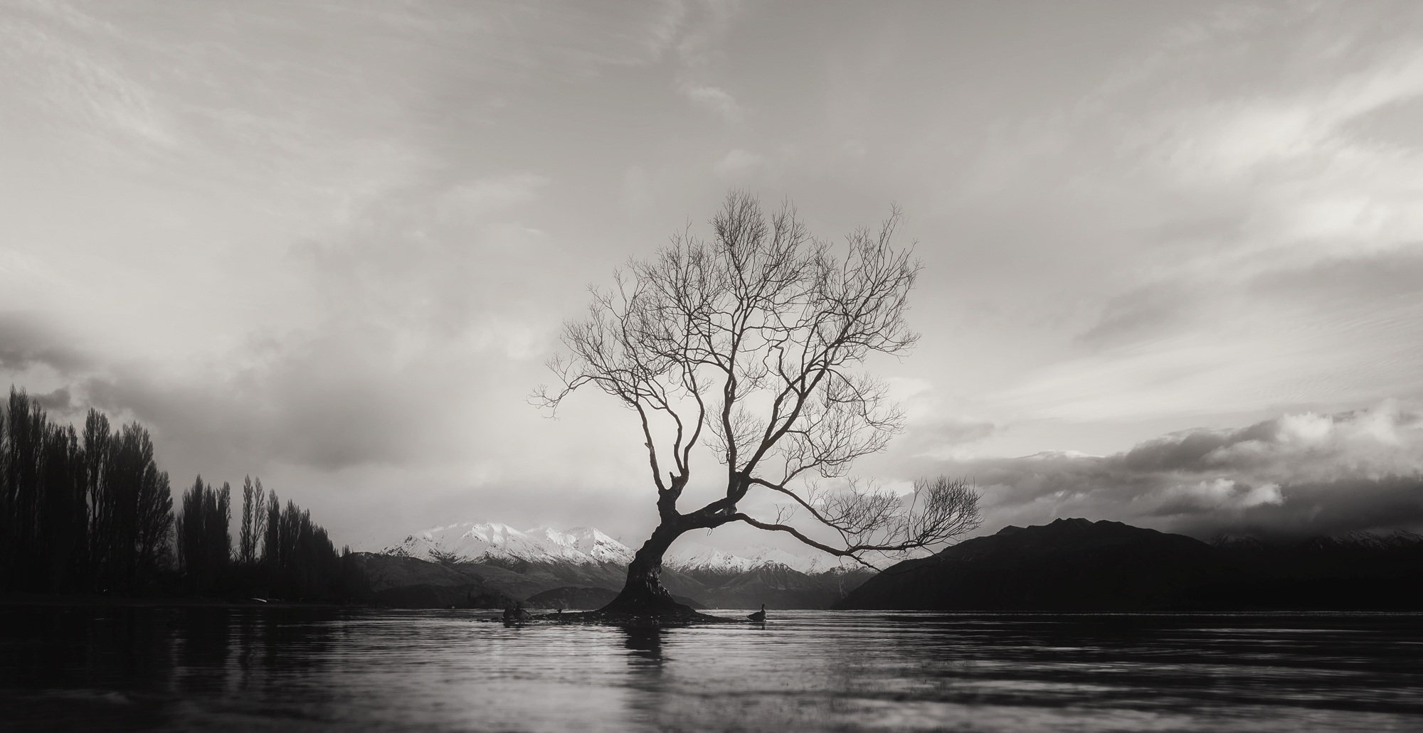 Free stock photo of alone, beautiful, black-and-white
