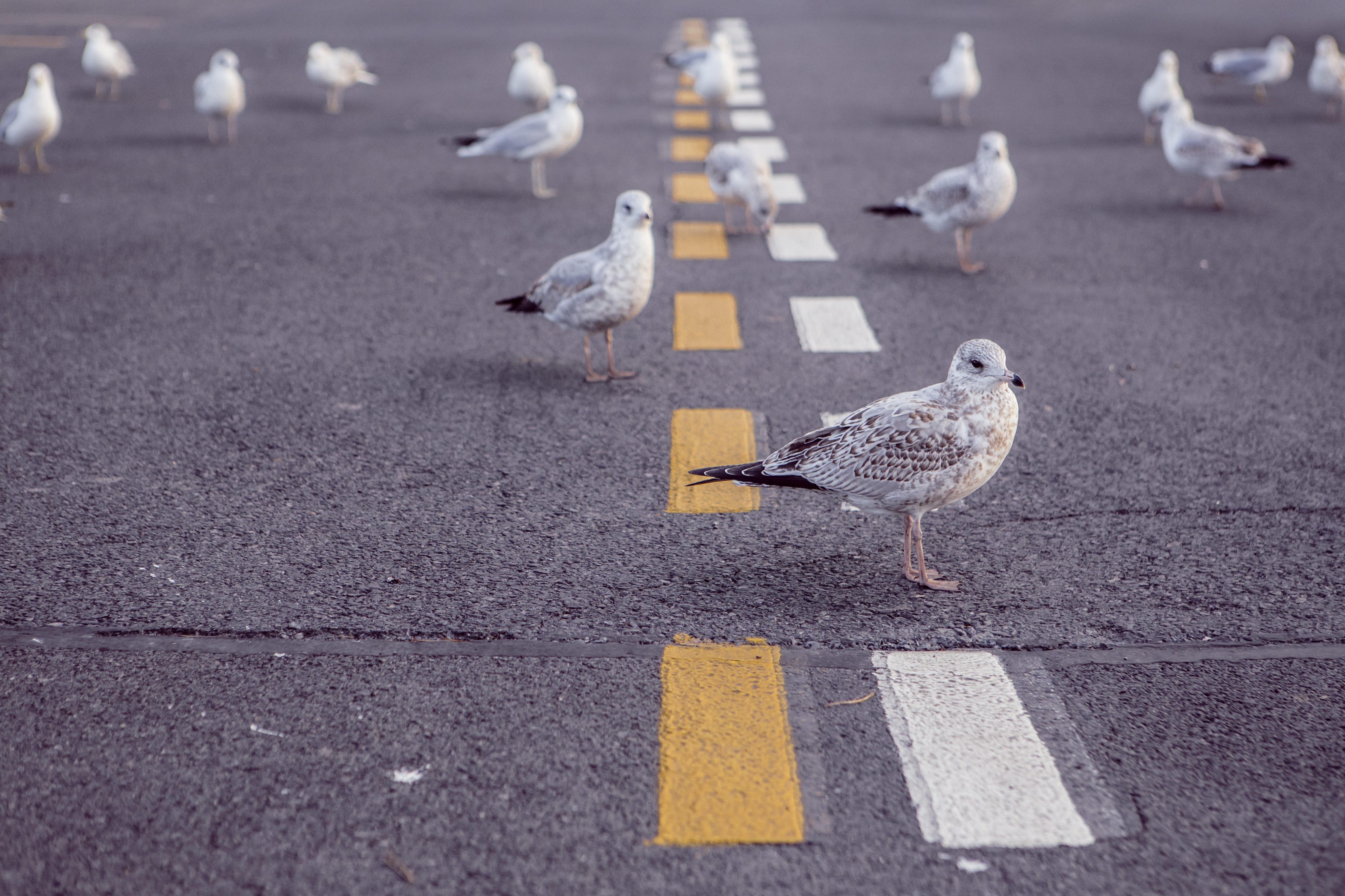 free stock photo of animals asphalt birds