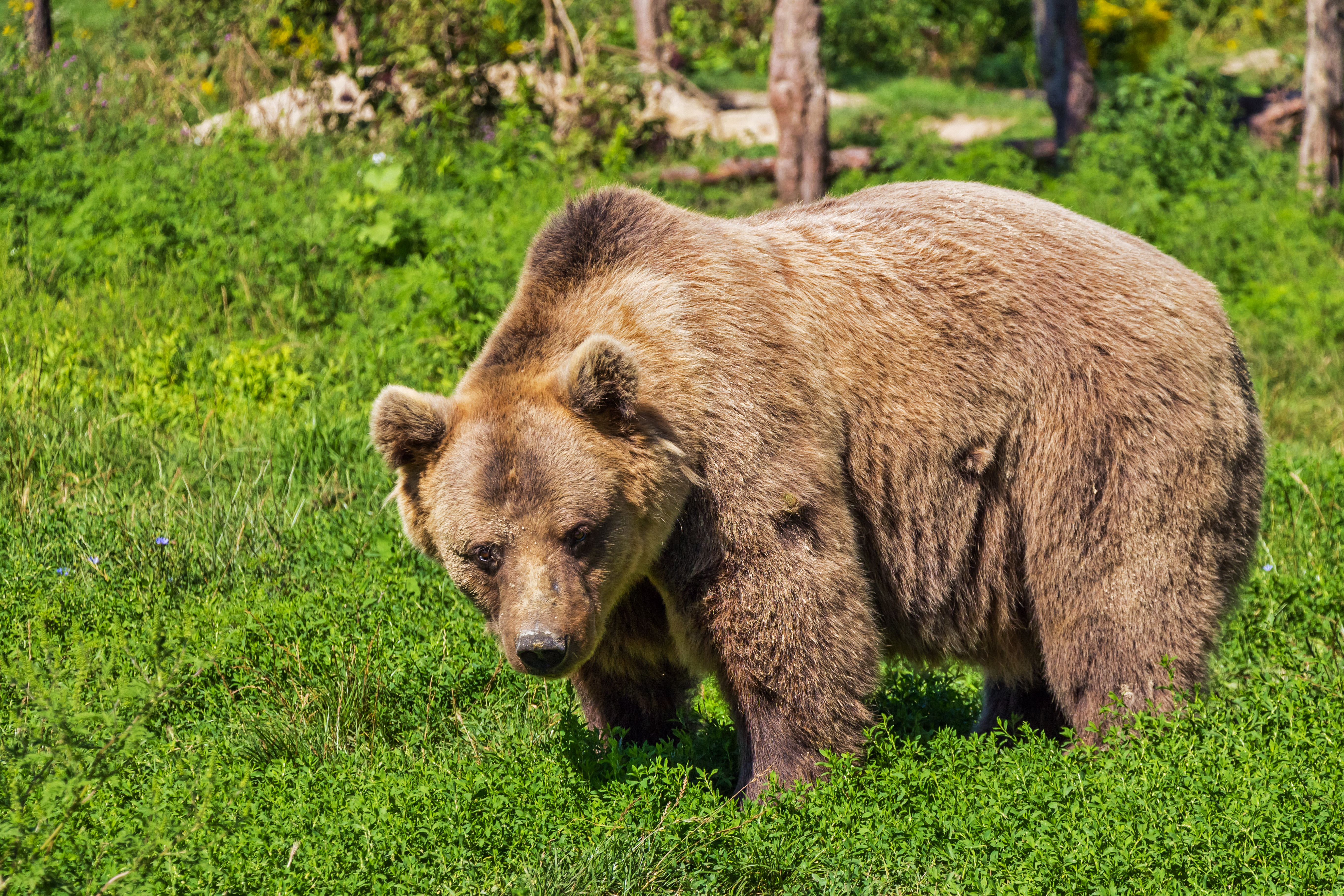 bear pictures pexels free stock photos