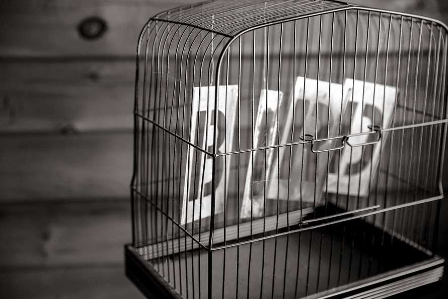 black-and-white, bird, birdcage