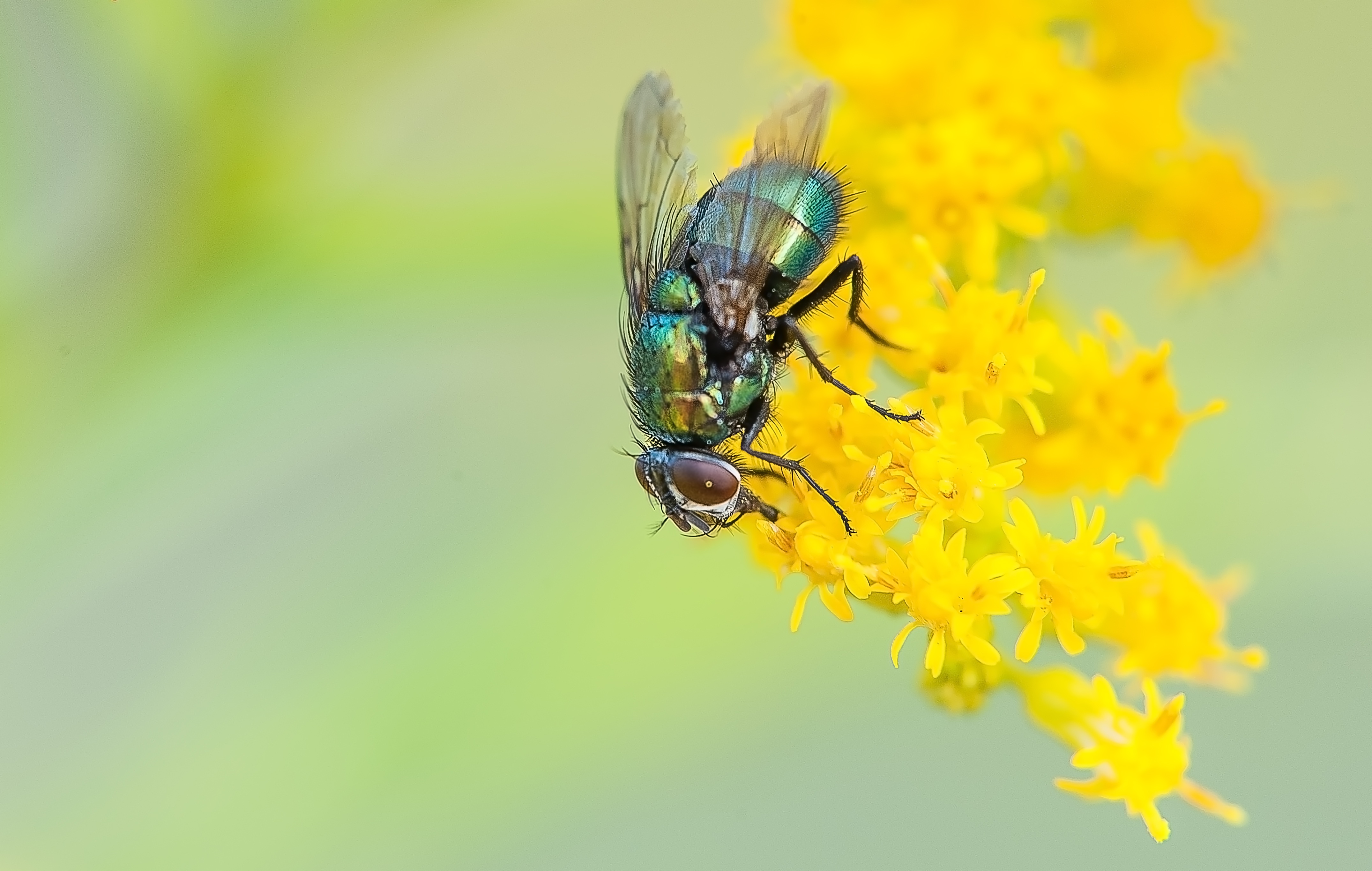free stock photo of bug fly insect