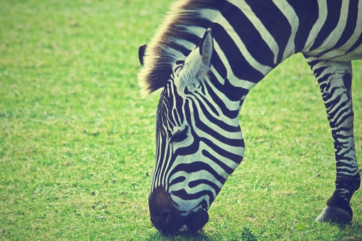 Free stock photo of animal, grass, meadow, africa