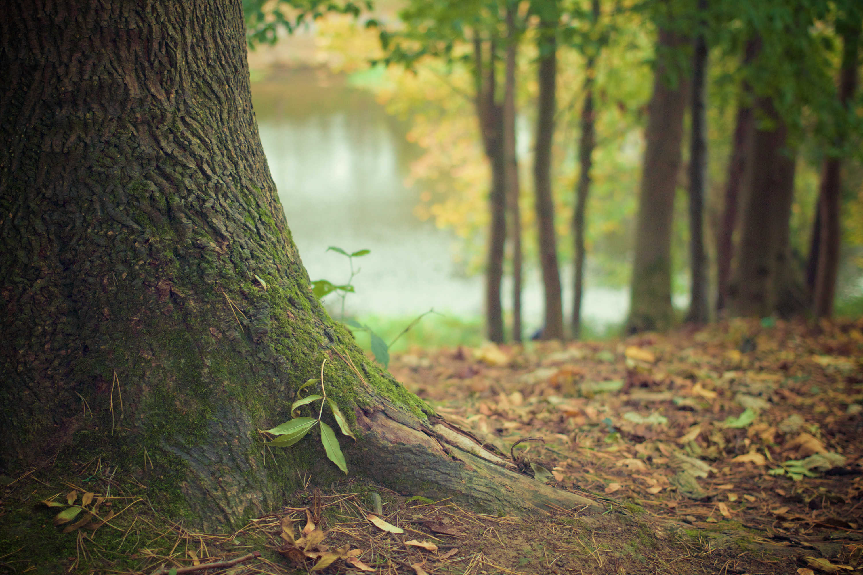 Free Nature Stock Photos Download For Free