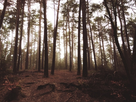 Trees on Brown Soil Under White Sky during Daytime