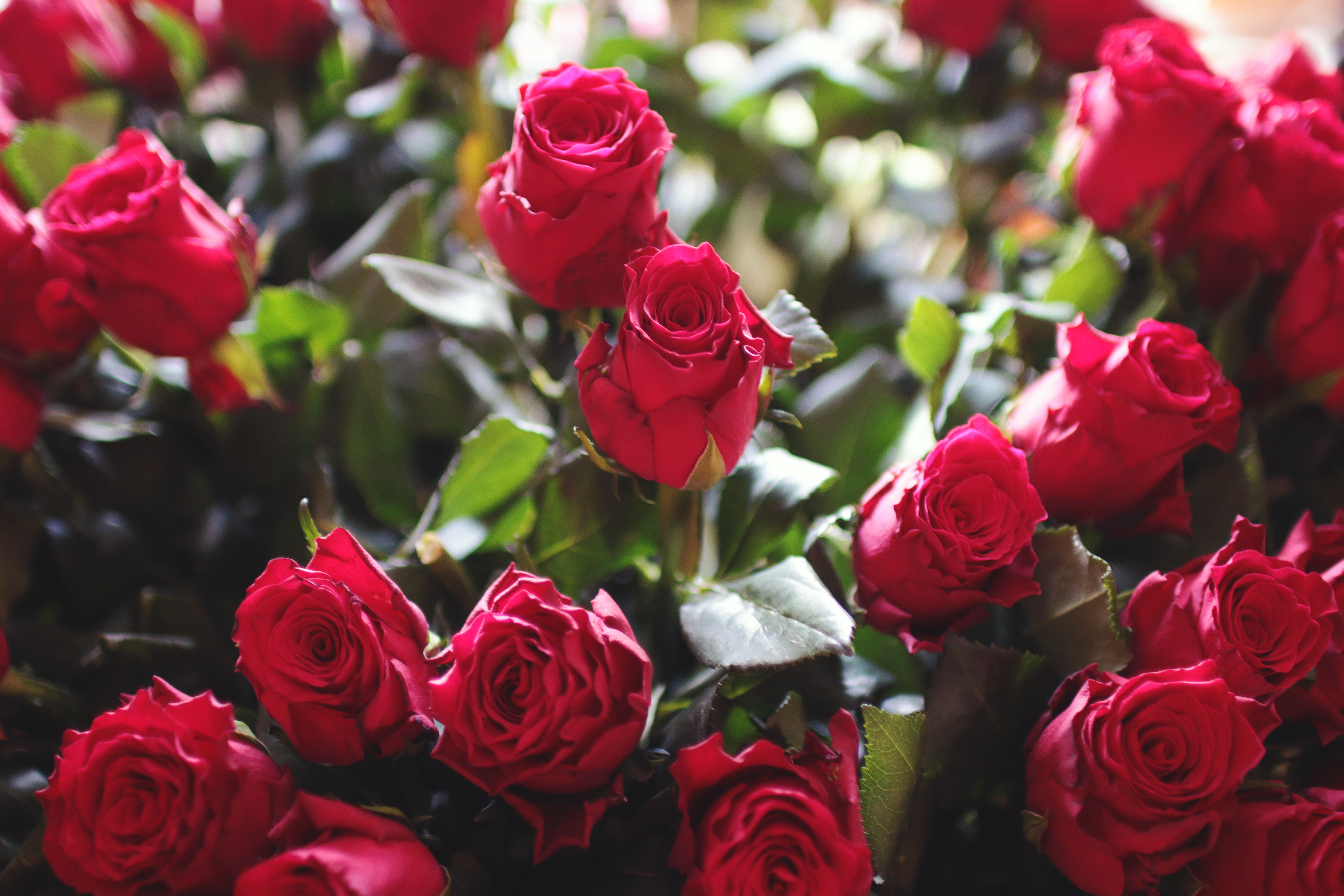 https://static.pexels.com/photos/4825/red-love-romantic-flowers.jpg