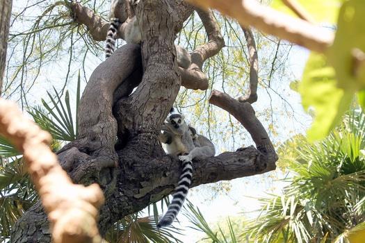 Free stock photo of nature, tree, africa, animals