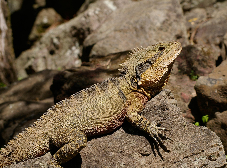 dragon pictures pexels free stock photos