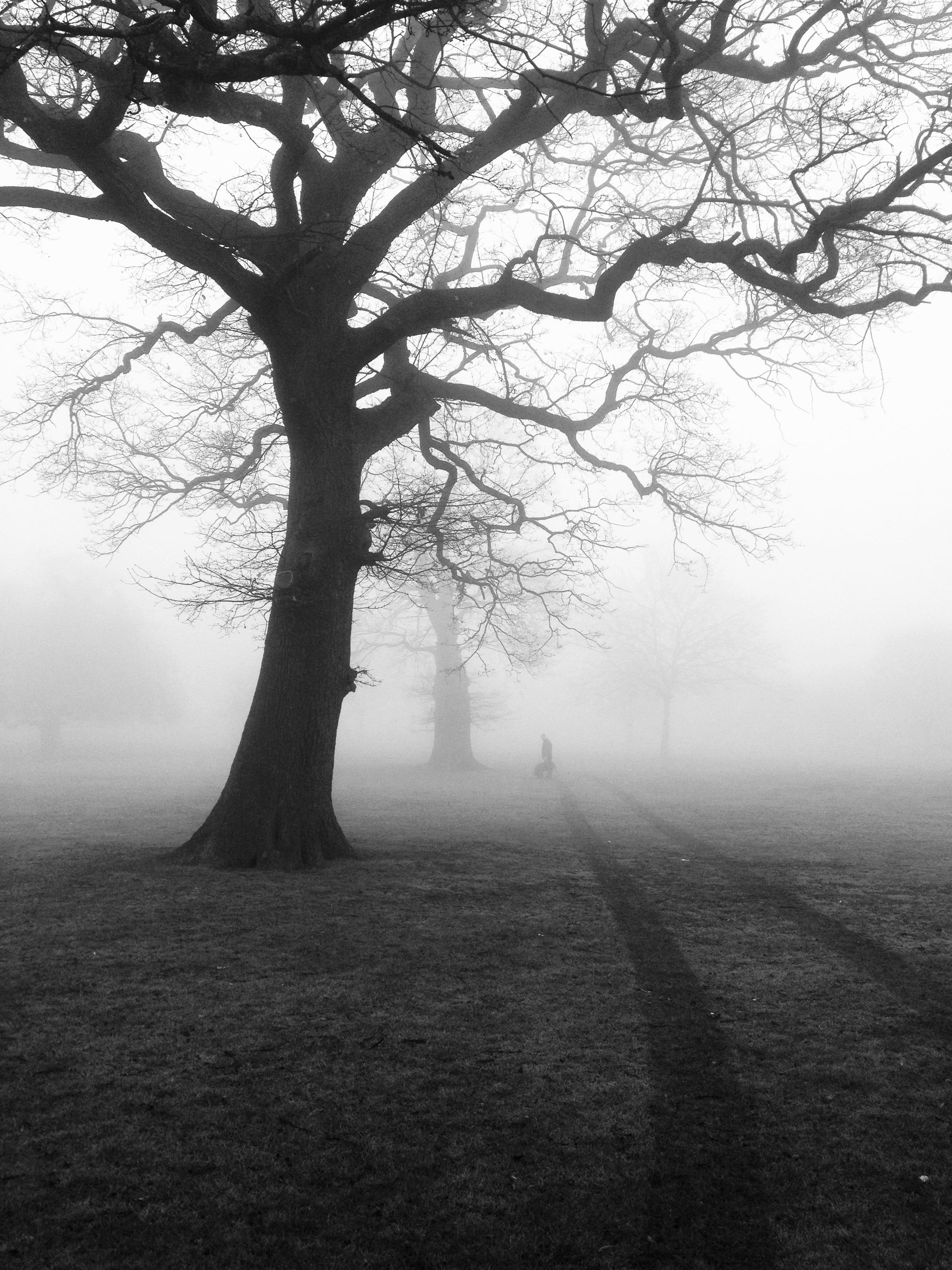 trees-mist-fog-eerie-51000.jpeg (2448×3264)