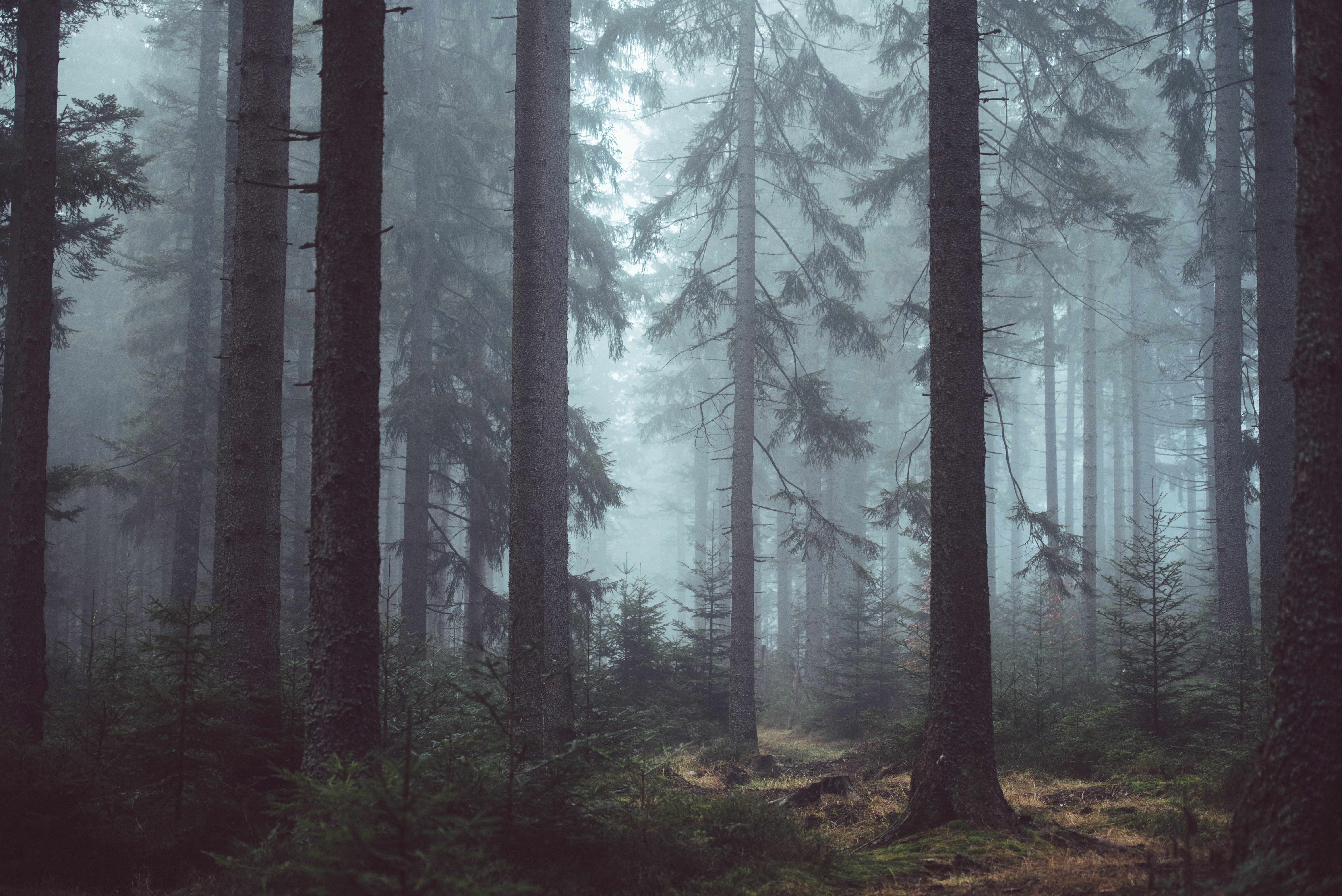 Free Stock Photo Of Eerie Forest Forest Trees