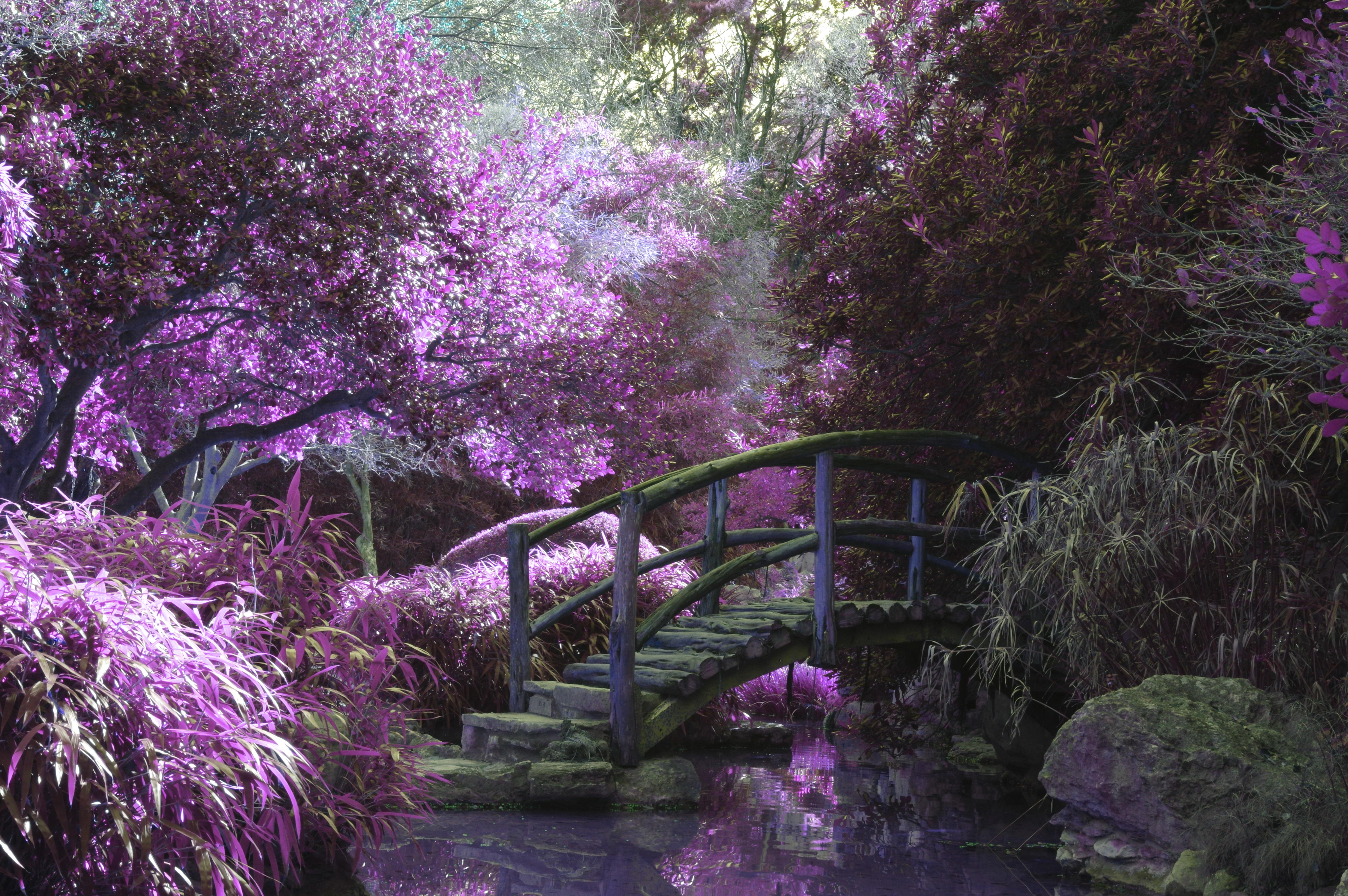 free stock photo of arch blossoms bridge. Black Bedroom Furniture Sets. Home Design Ideas