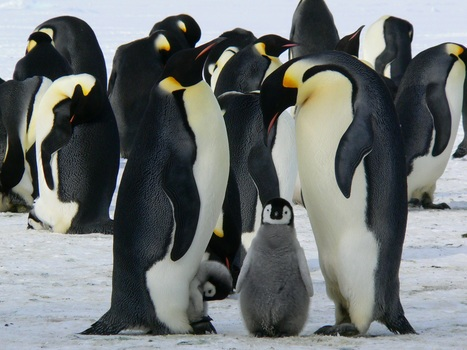 Penguins Standing on the Snow during Daytime
