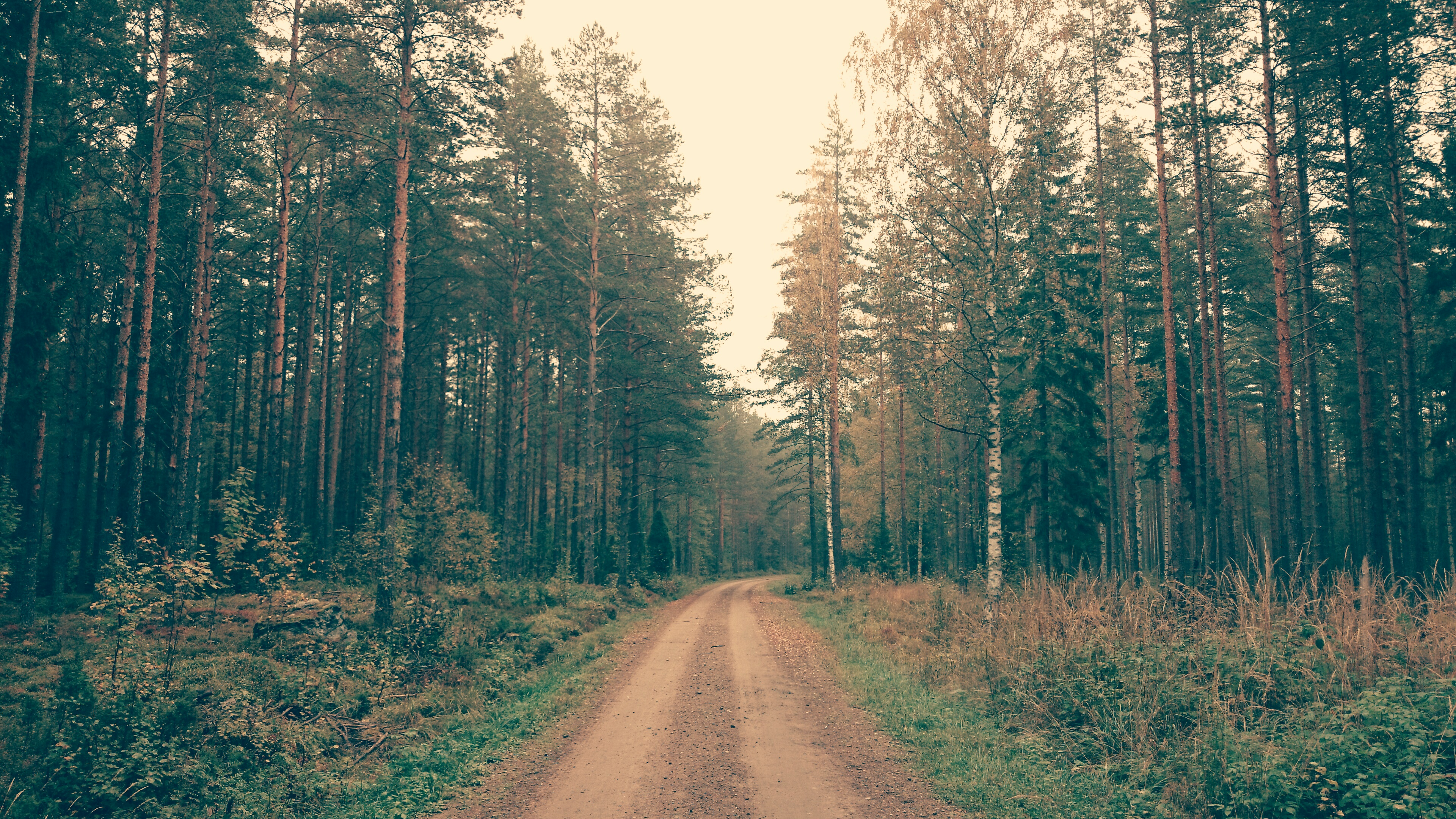 Desktop wallpaper - Brown Dirt Road Between Green Leaved Trees During Daytime