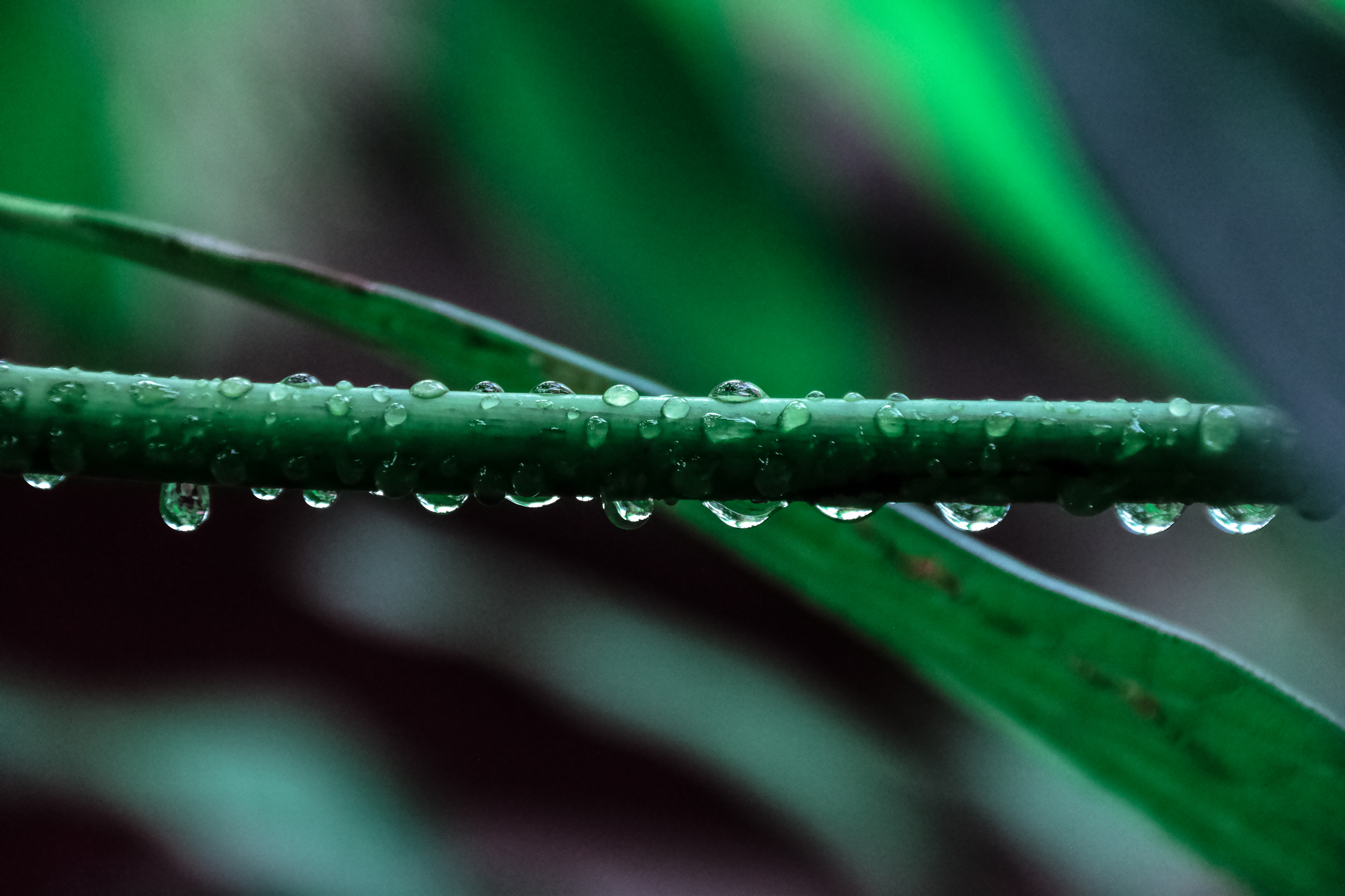 macro photography of green leaf plant free stock photo
