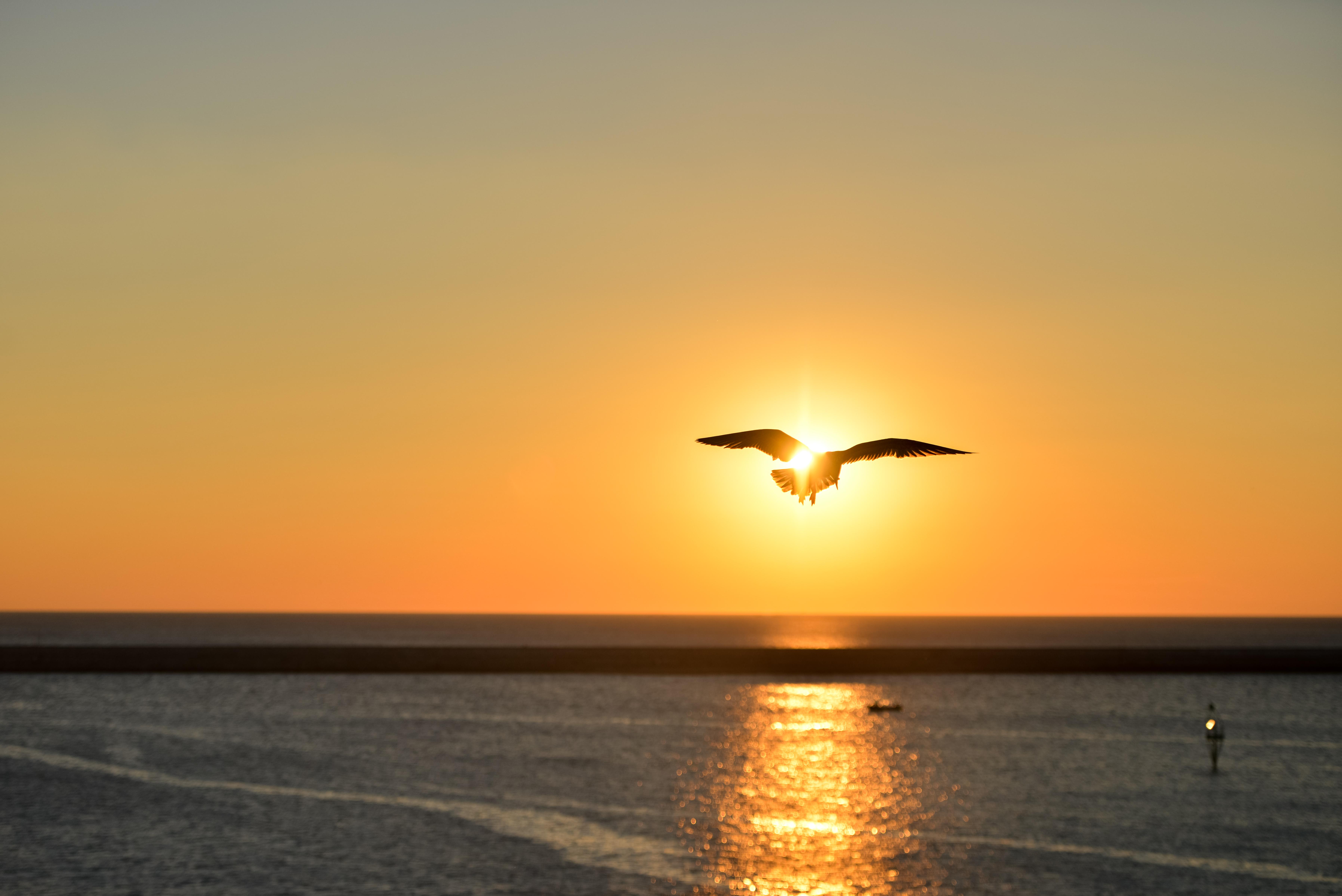 Sea Sunset Bird Flying 5307