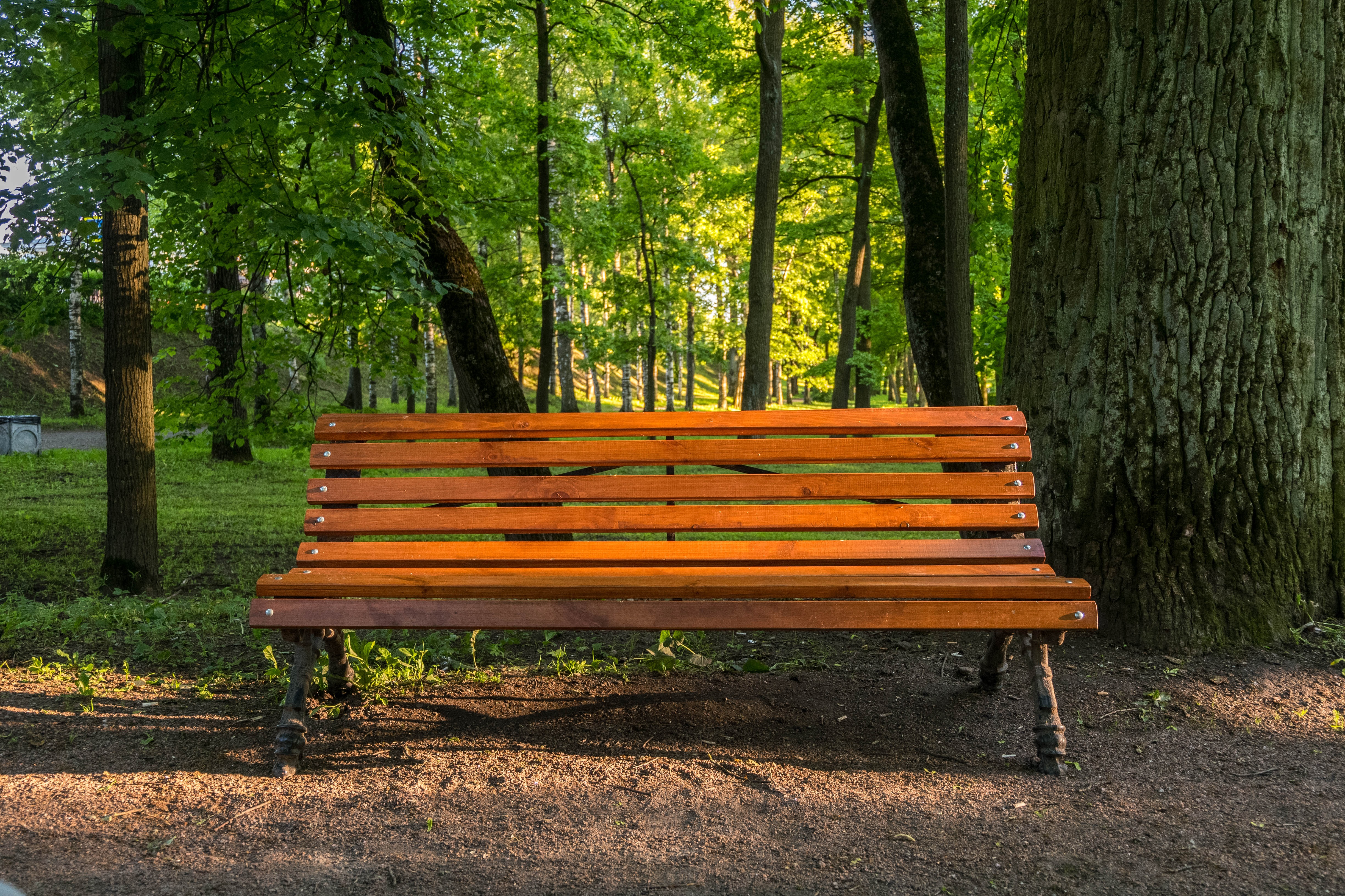 Free Stock Photo Of Beautiful, Bench, Brown
