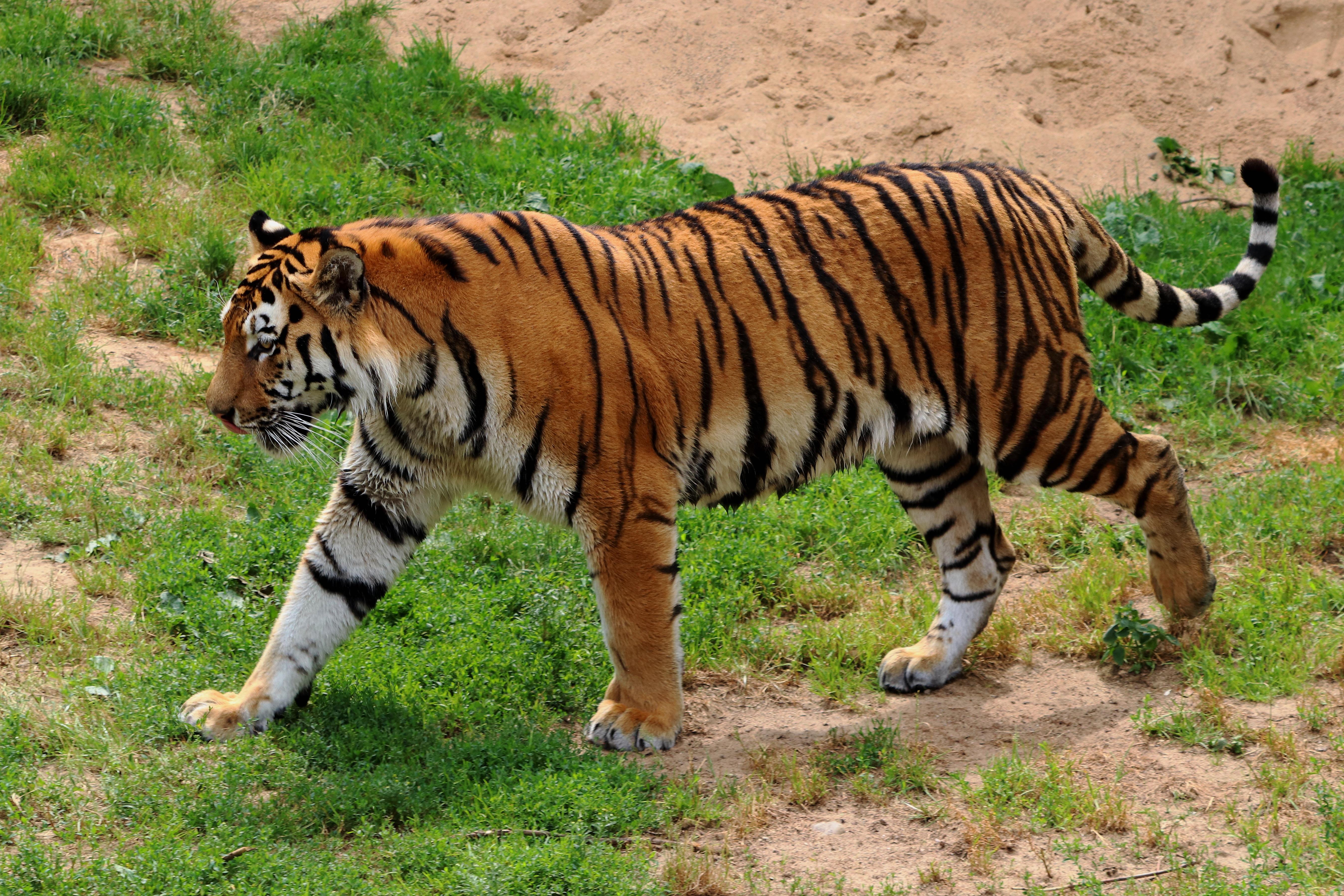 waking the tiger pdf free download