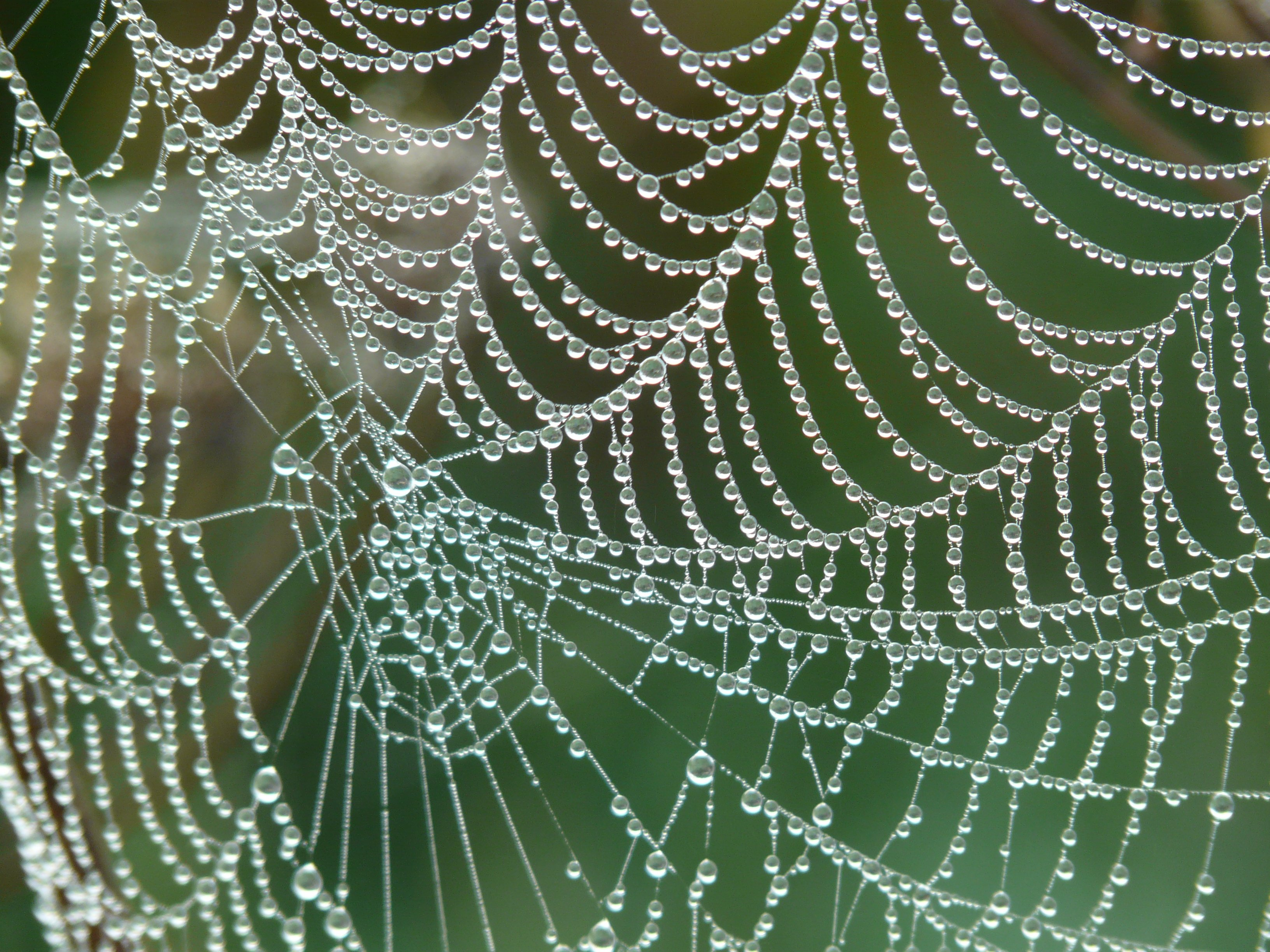 Free stock photos of spider web · Pexels