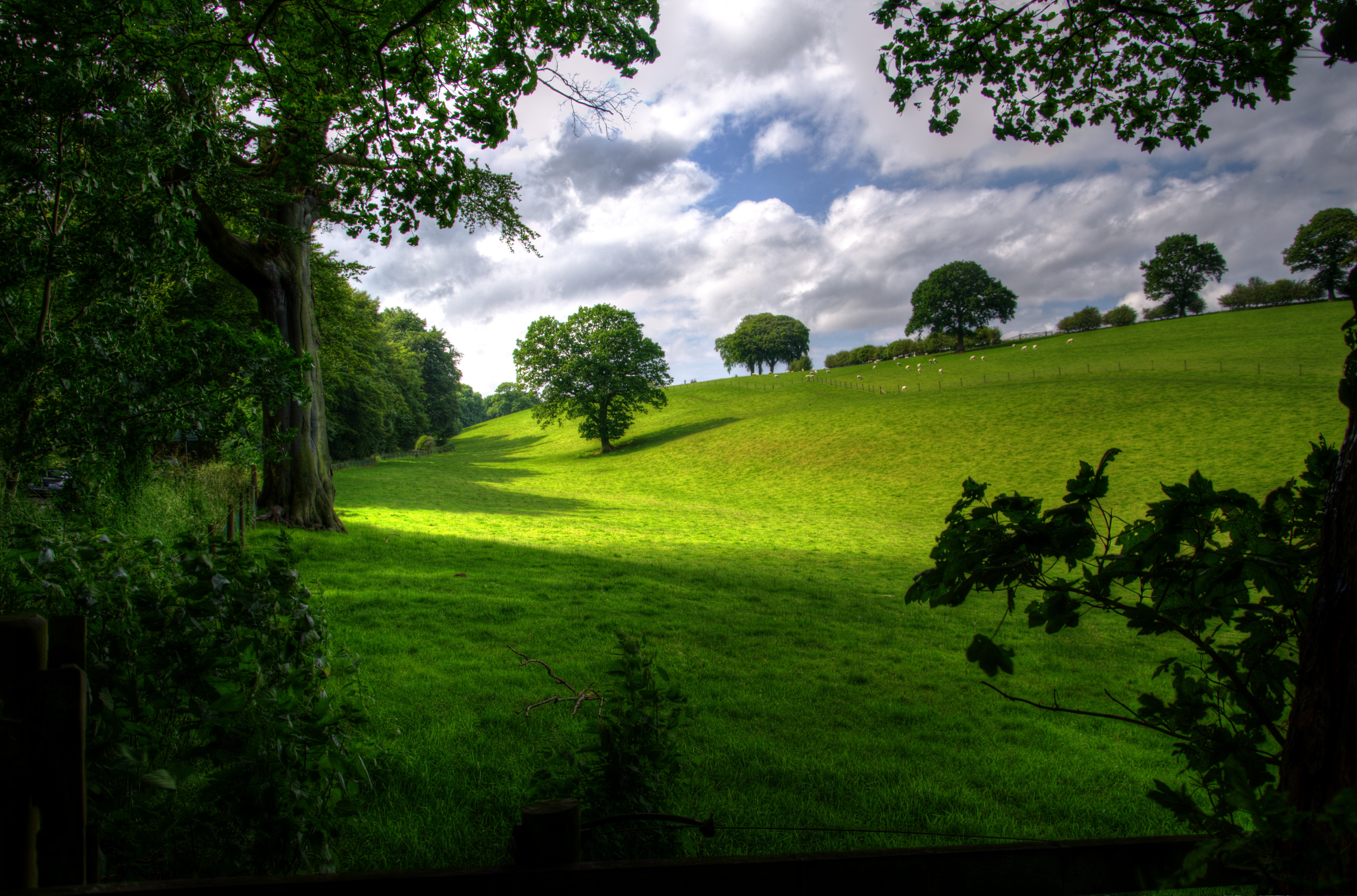 Green Hill With Tree Under White Clouds And Blue Sky