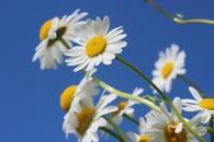 flowers, macro, bloom